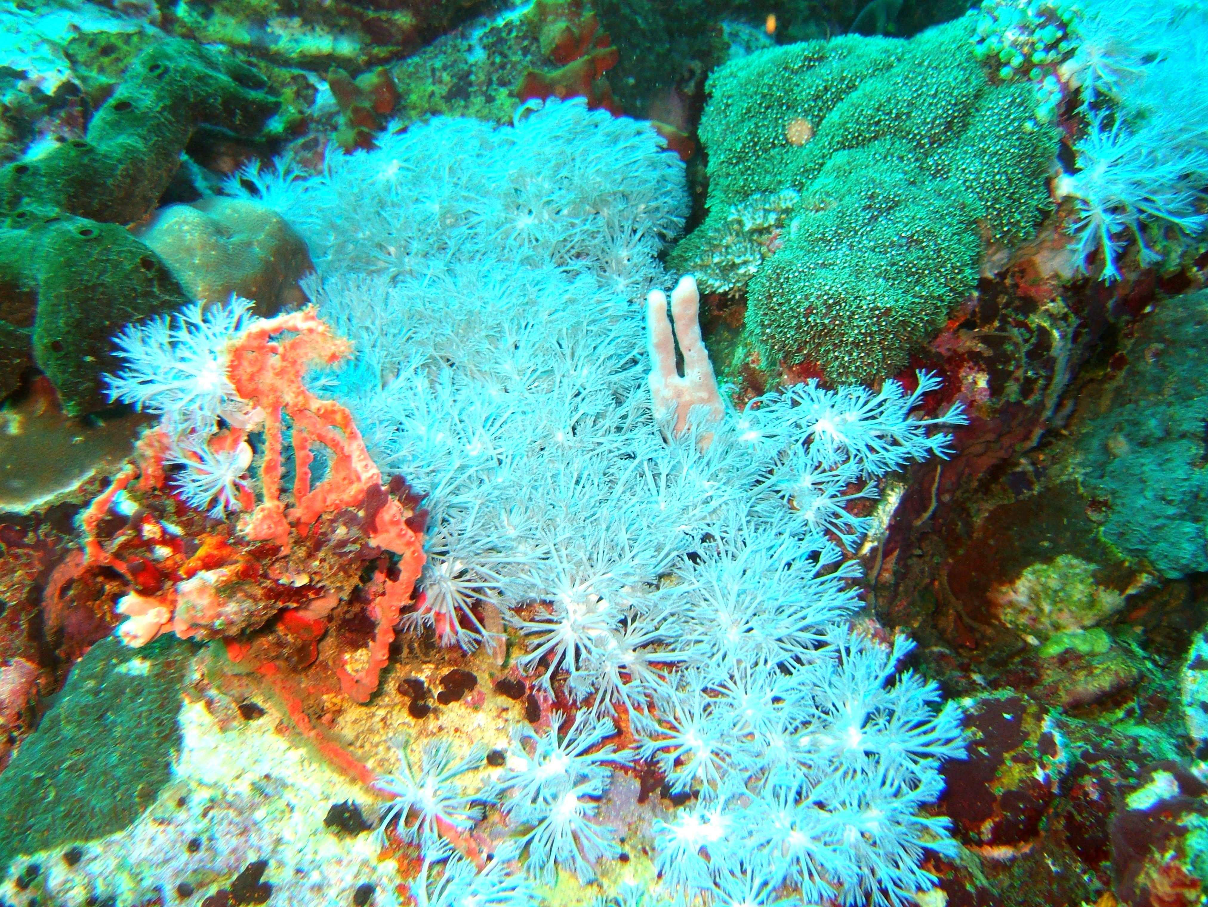Dive 27 Philippines Mindoro Verdi Island Nov 2005 49