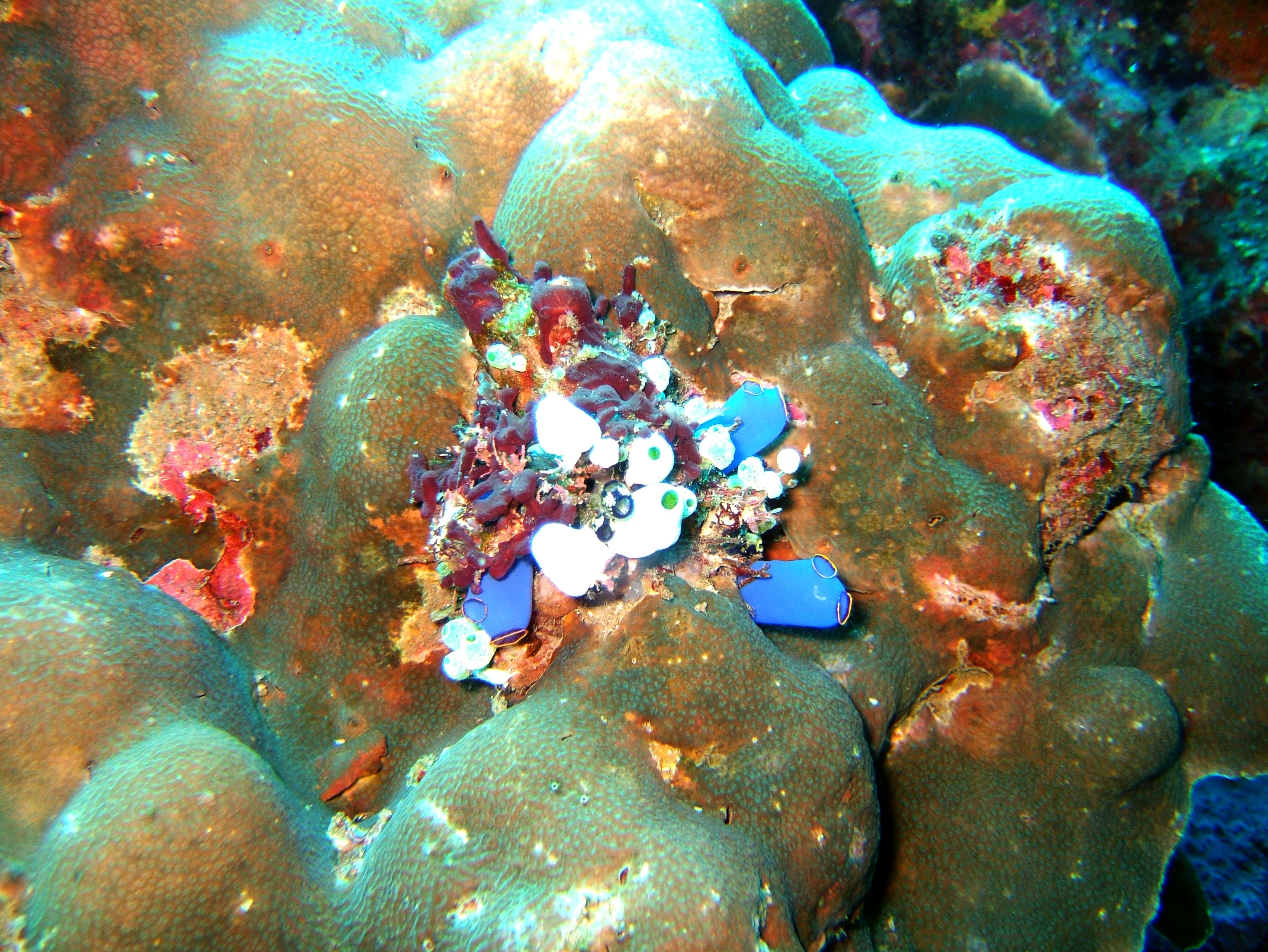 Dive 27 Philippines Mindoro Verdi Island Nov 2005 50