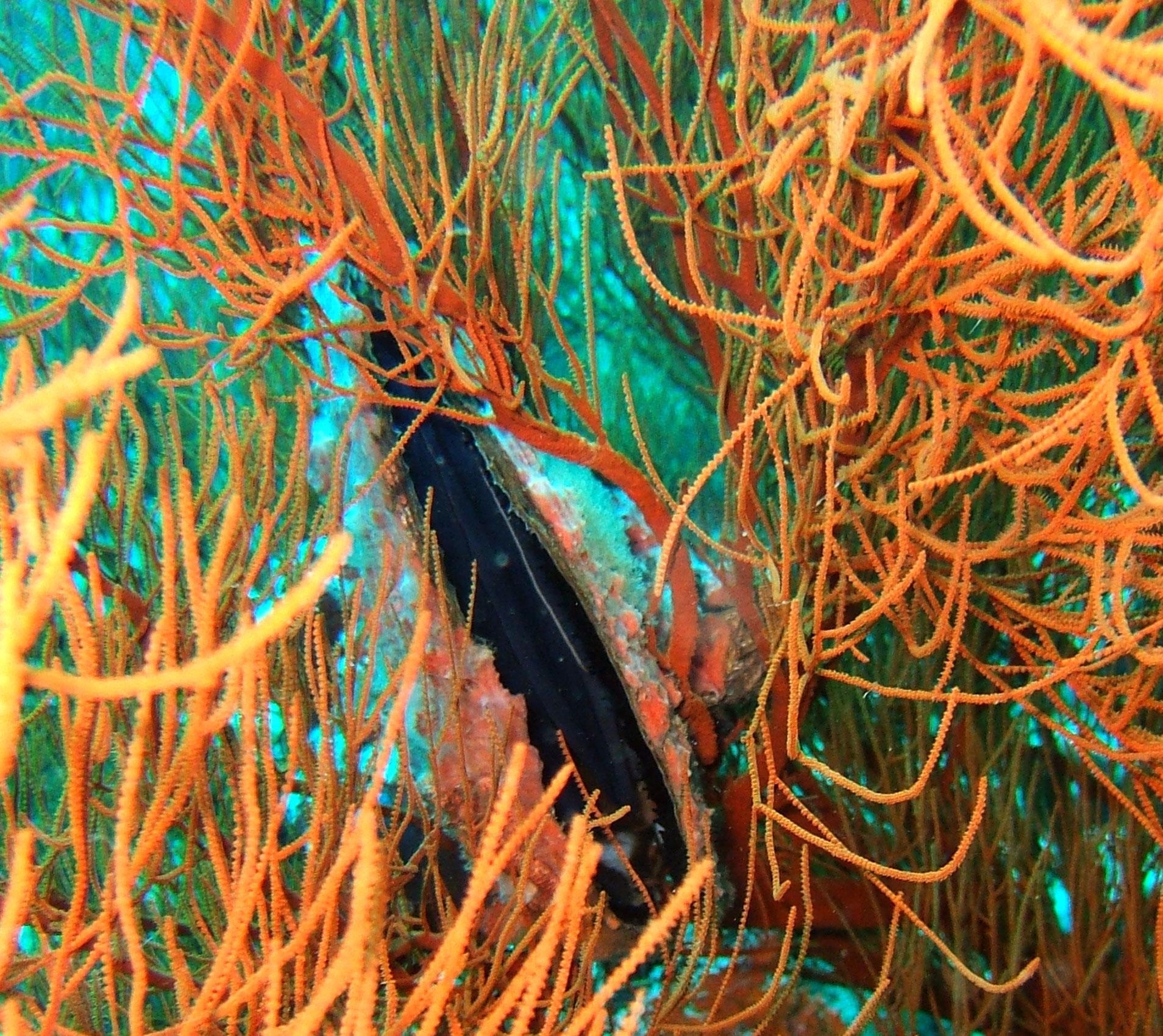 Dive 27 Philippines Mindoro Verdi Island Nov 2005 53