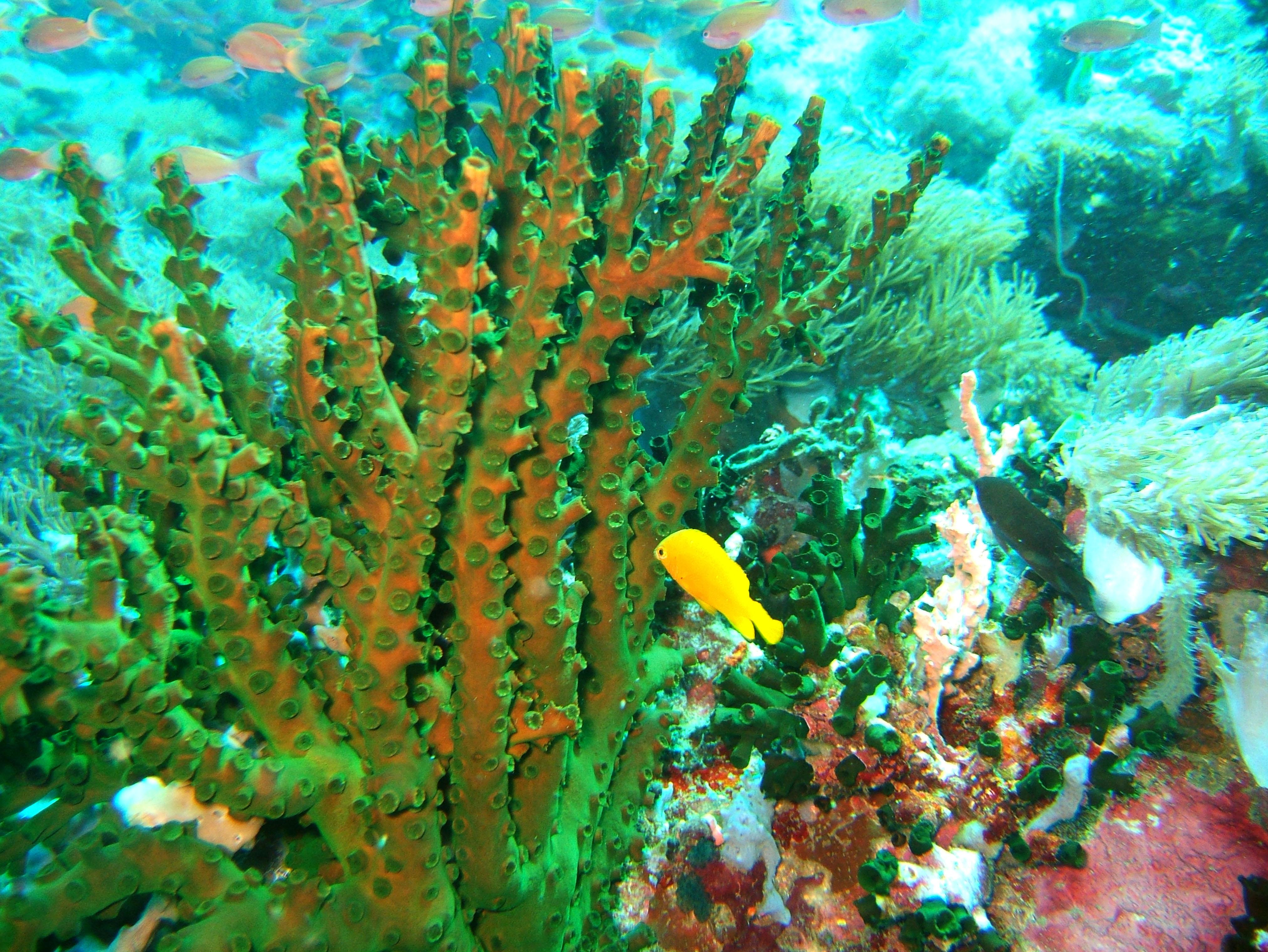 Dive 27 Philippines Mindoro Verdi Island Nov 2005 57