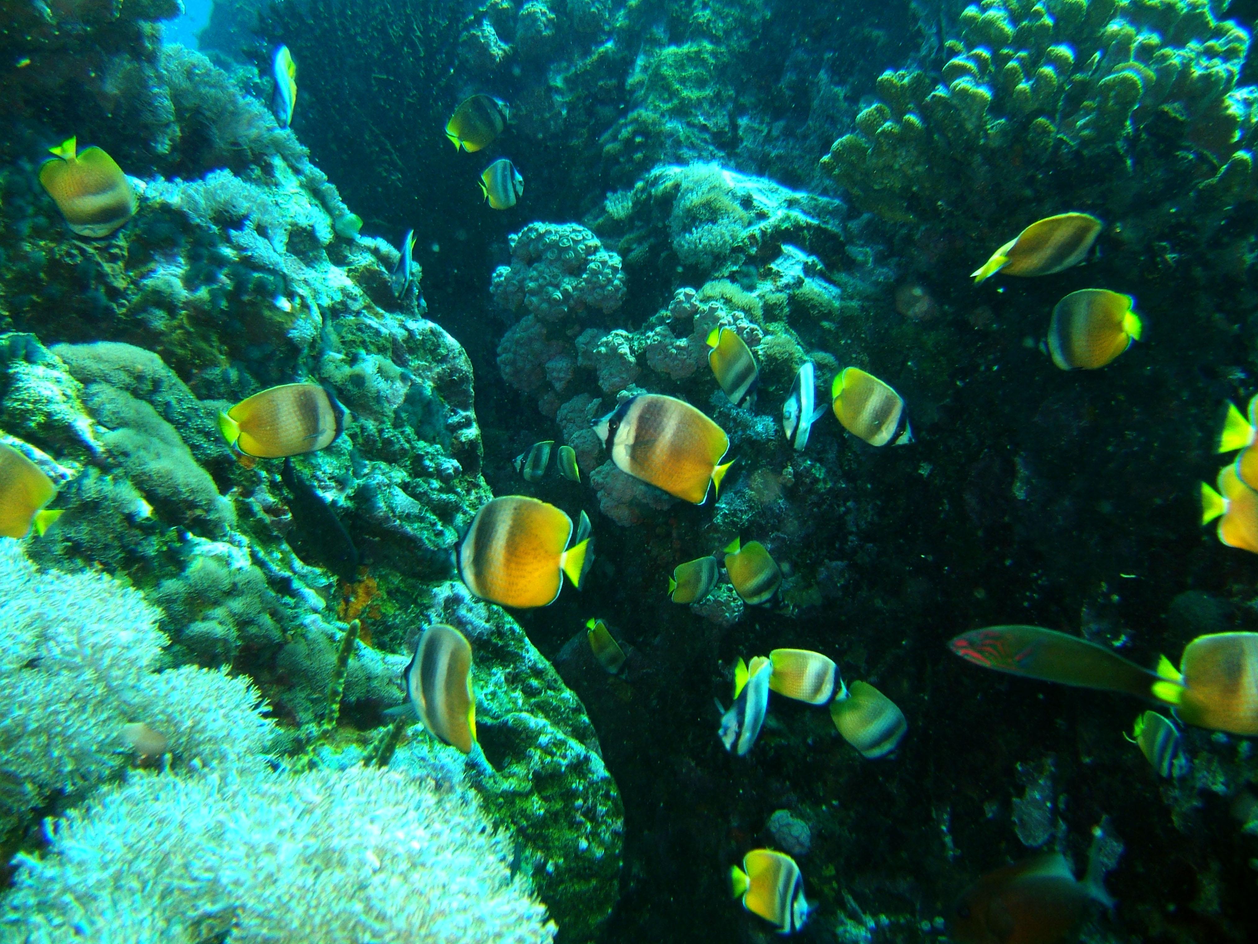 Dive 27 Philippines Mindoro Verdi Island Nov 2005 59