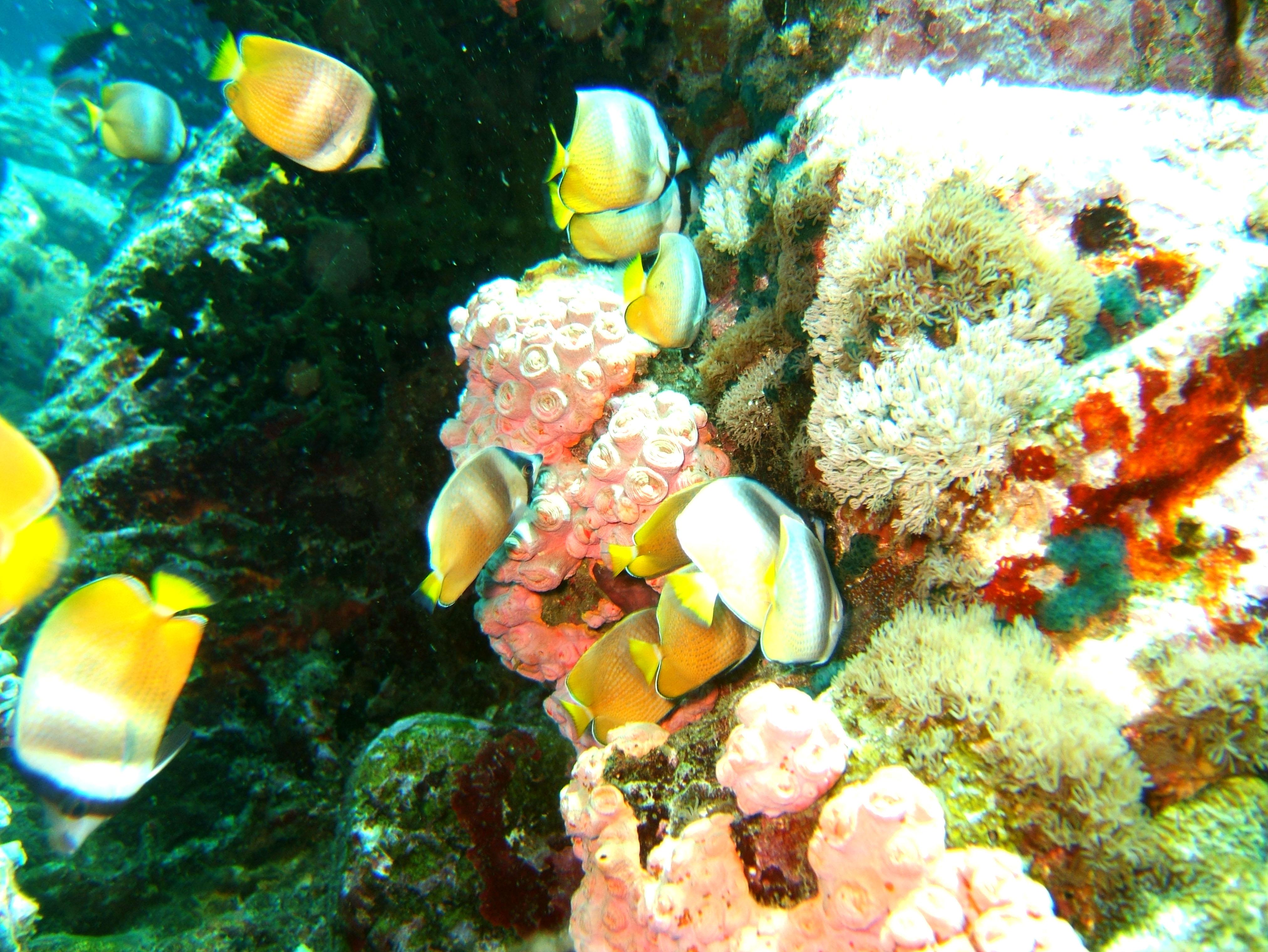 Dive 27 Philippines Mindoro Verdi Island Nov 2005 61