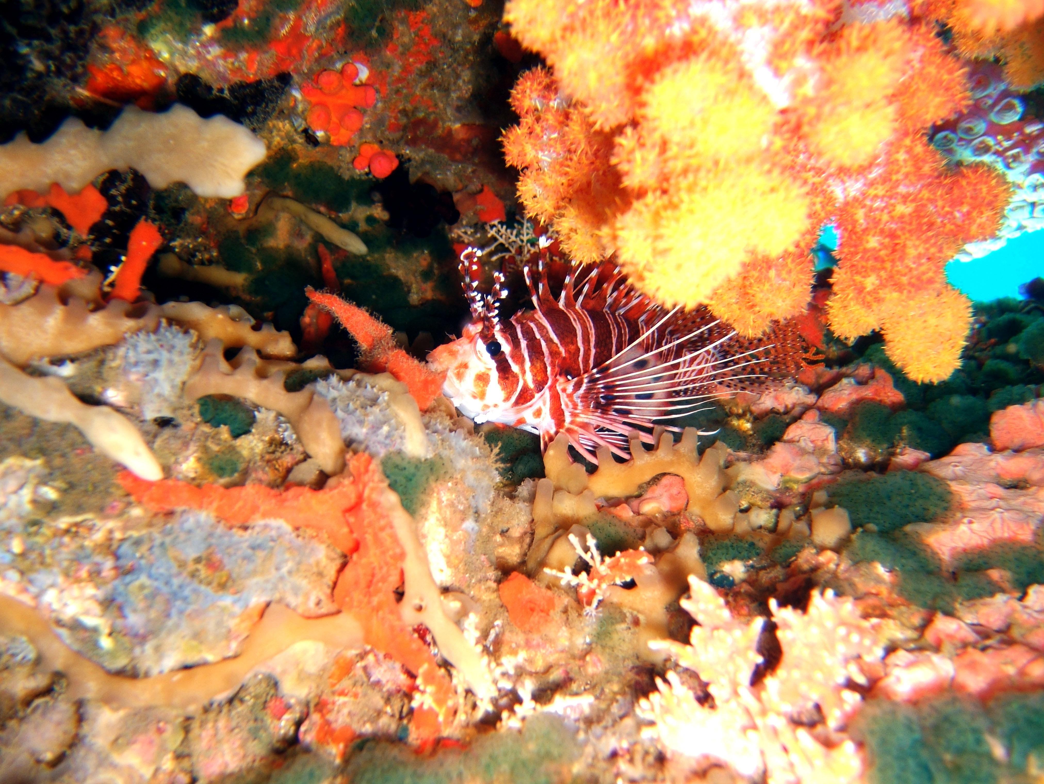 Dive 27 Philippines Mindoro Verdi Island Nov 2005 62