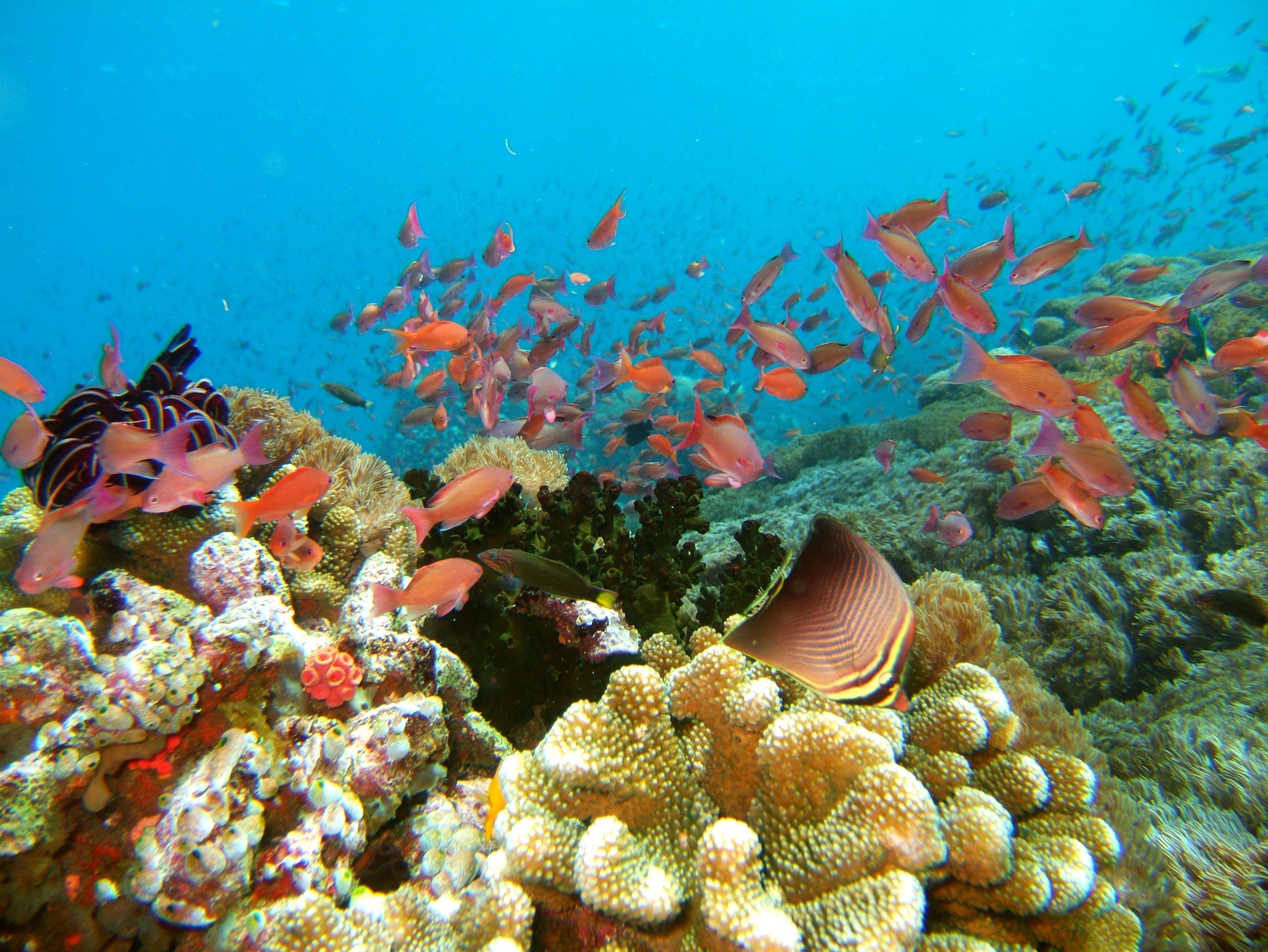 Dive 27 Philippines Mindoro Verdi Island Nov 2005 63