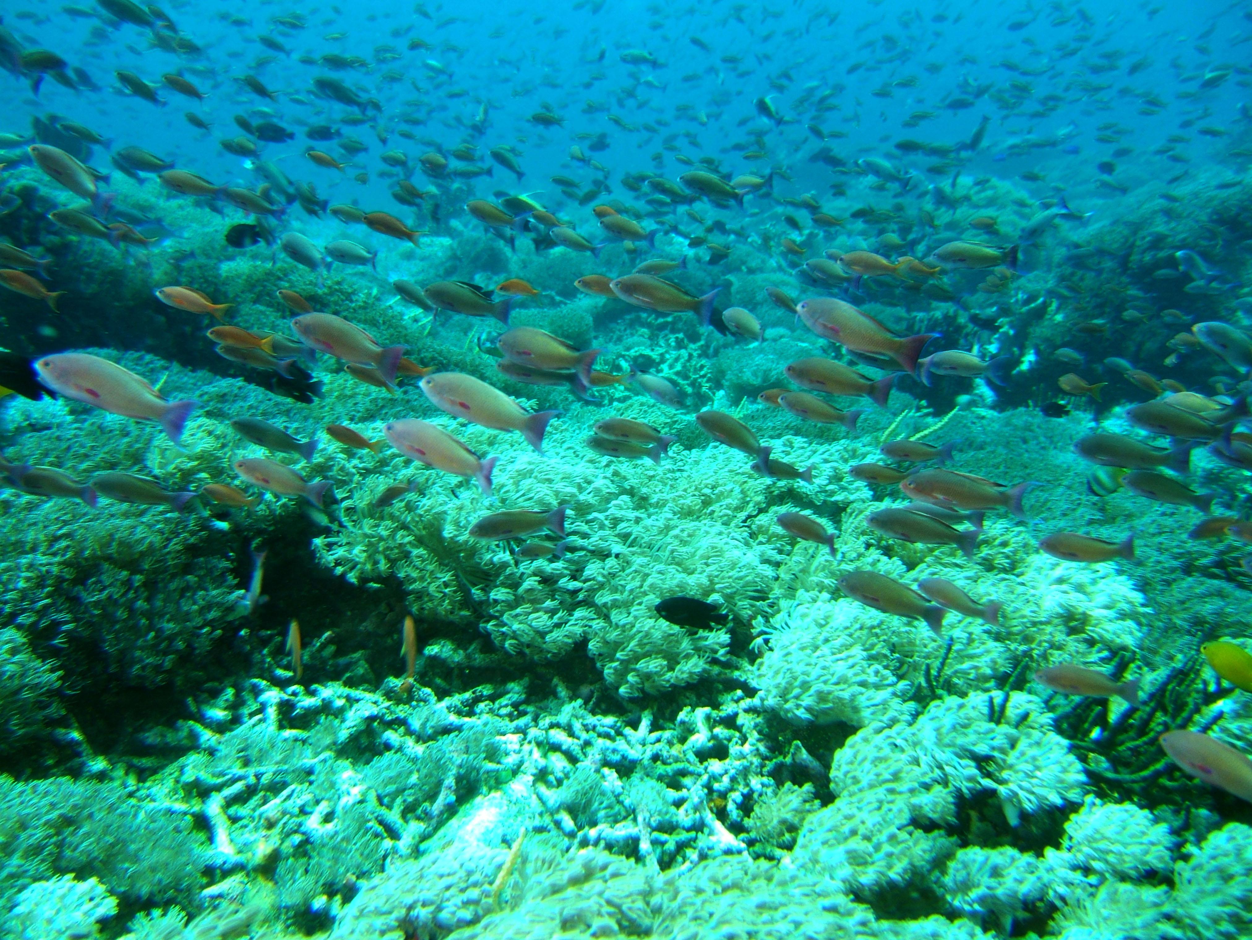 Dive 27 Philippines Mindoro Verdi Island Nov 2005 65