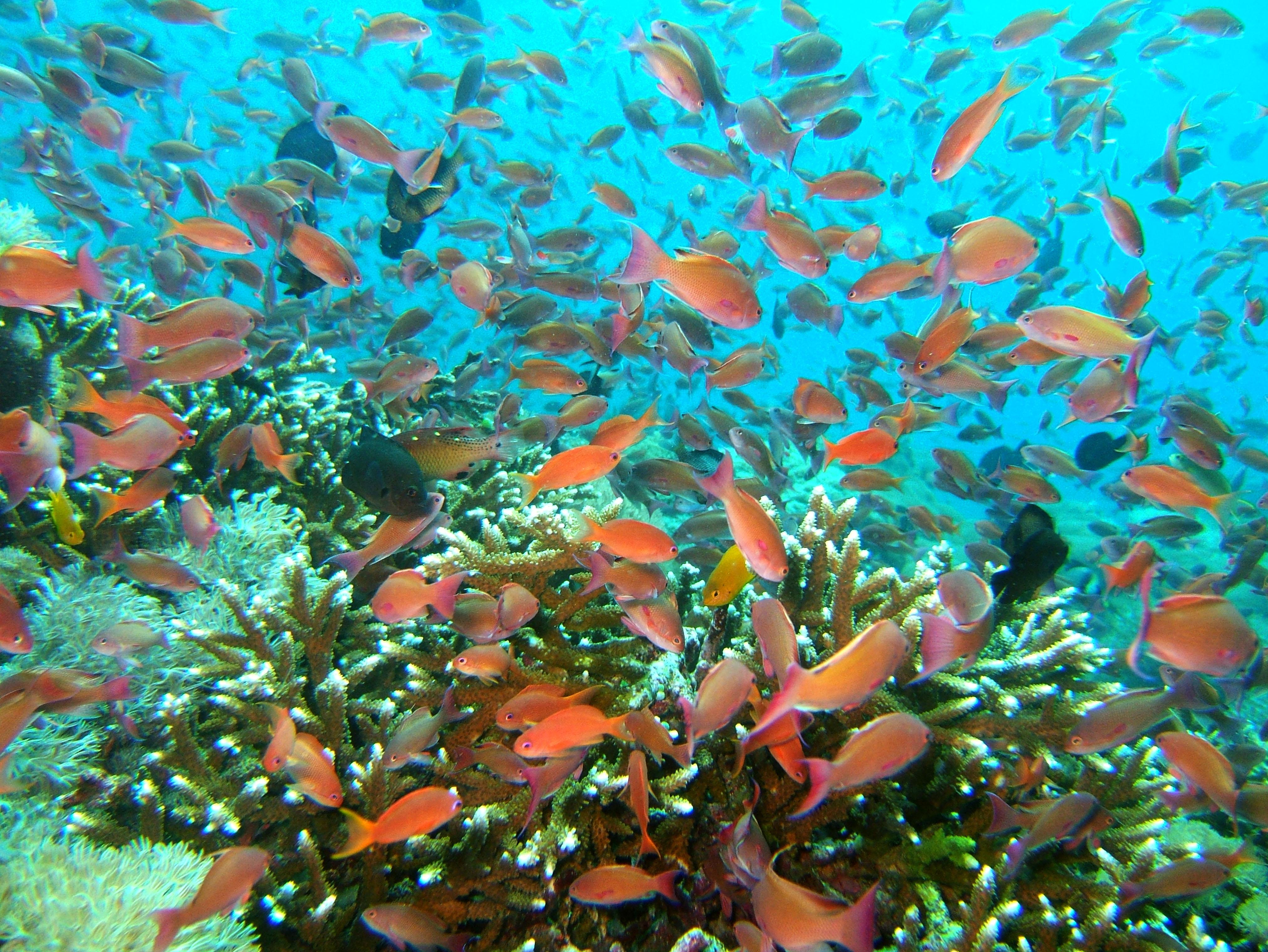 Dive 27 Philippines Mindoro Verdi Island Nov 2005 68