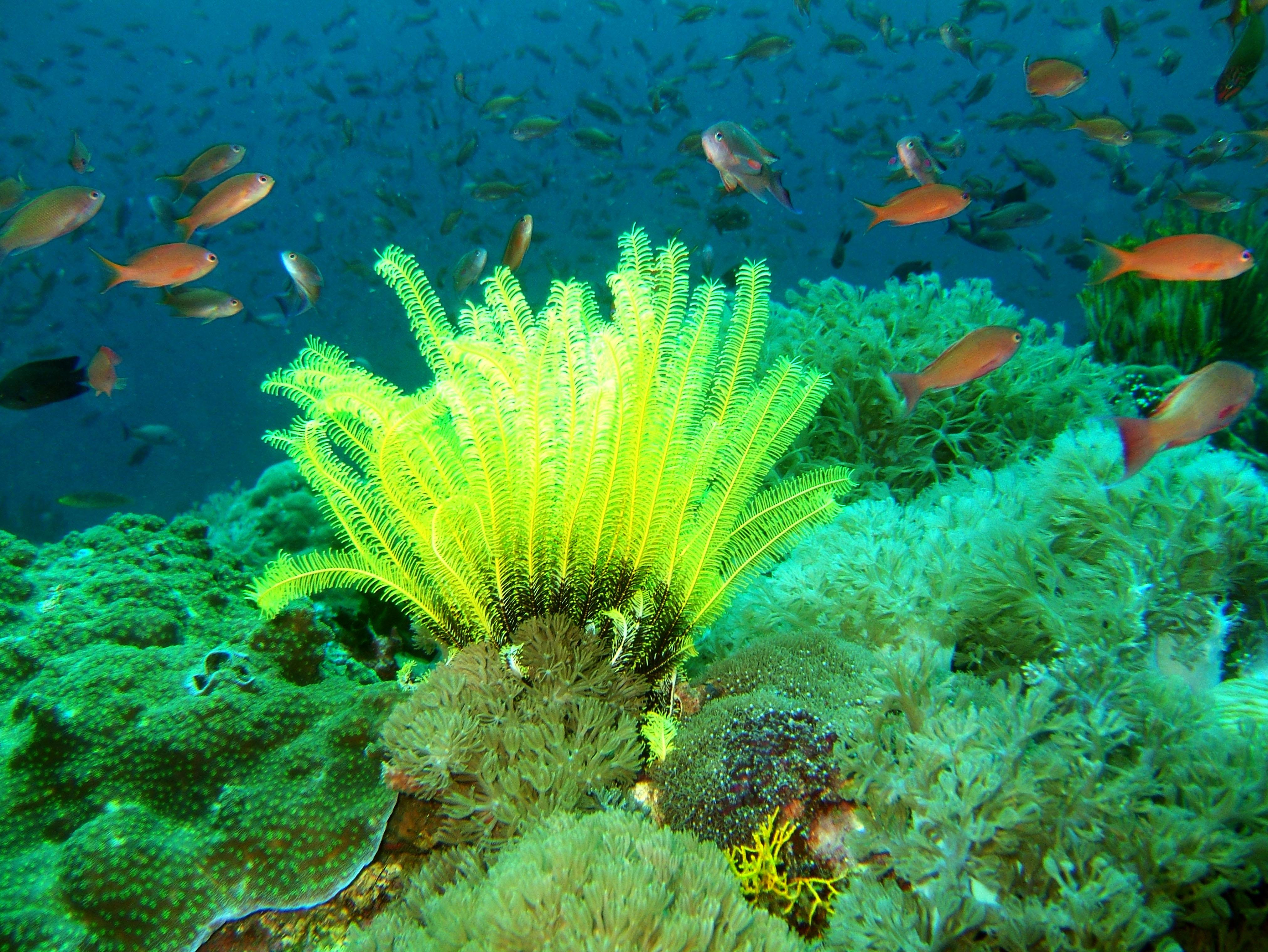 Dive 27 Philippines Mindoro Verdi Island Nov 2005 70