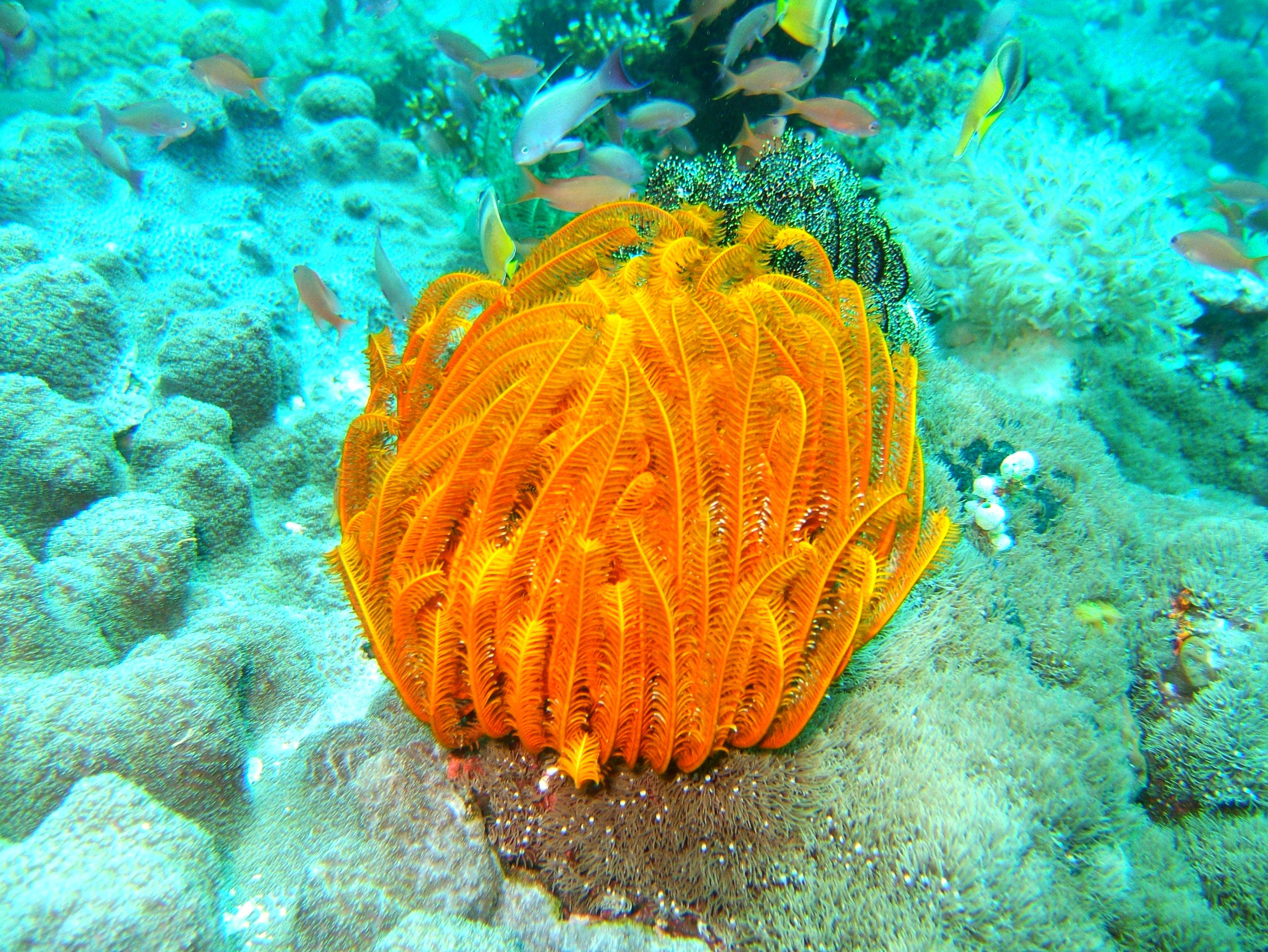 Dive 27 Philippines Mindoro Verdi Island Nov 2005 71