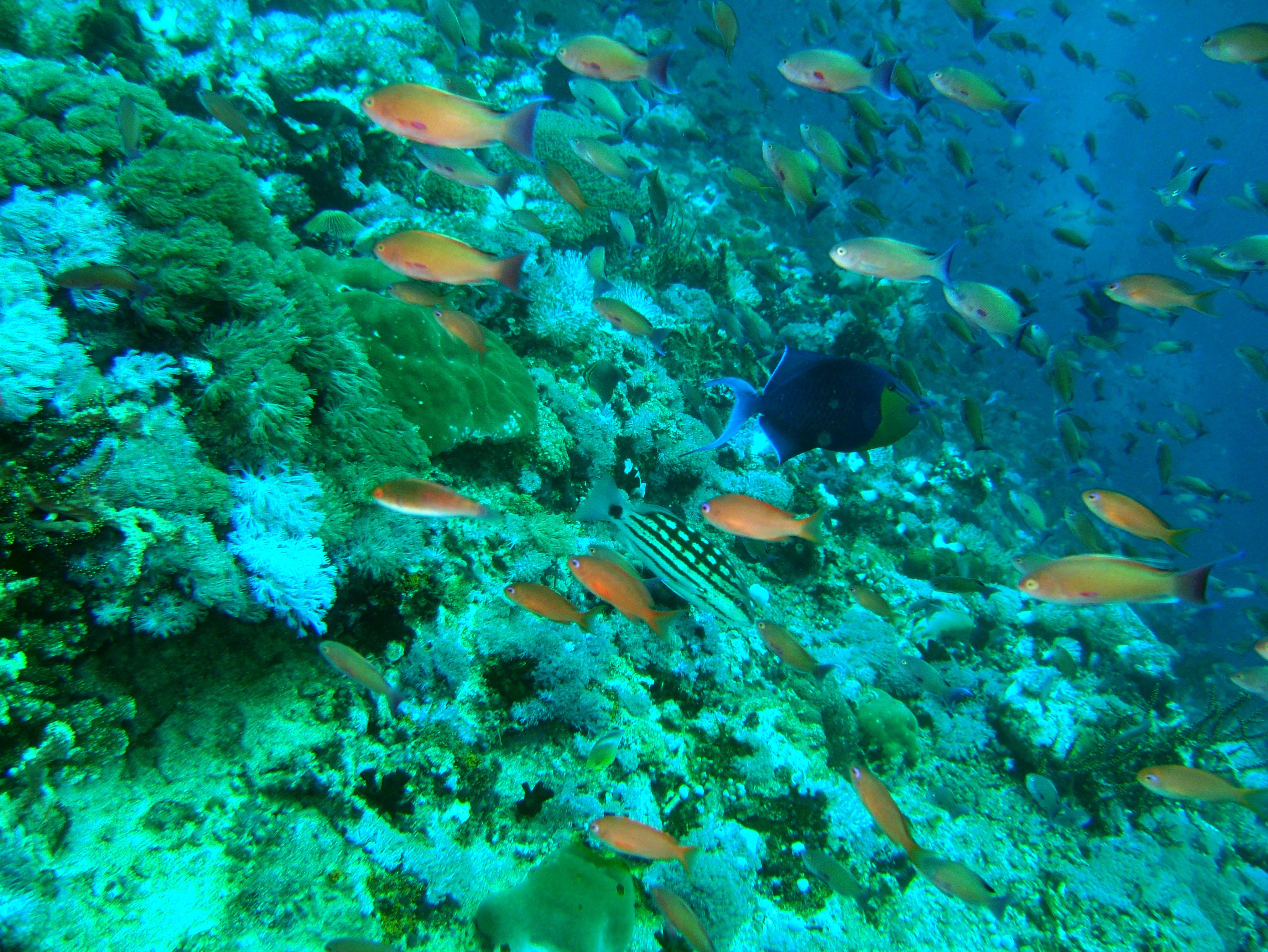 Dive 27 Philippines Mindoro Verdi Island Nov 2005 76
