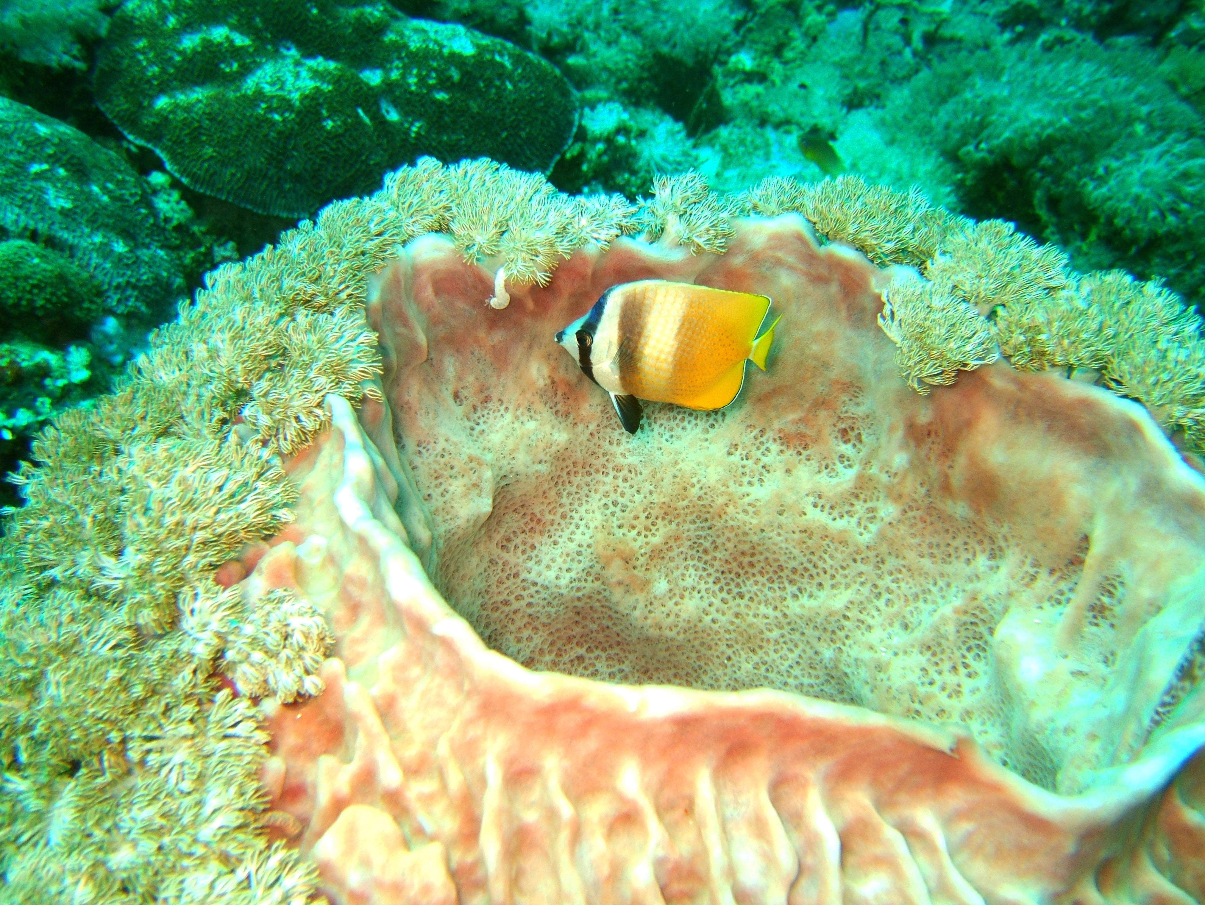 Dive 27 Philippines Mindoro Verdi Island Nov 2005 78