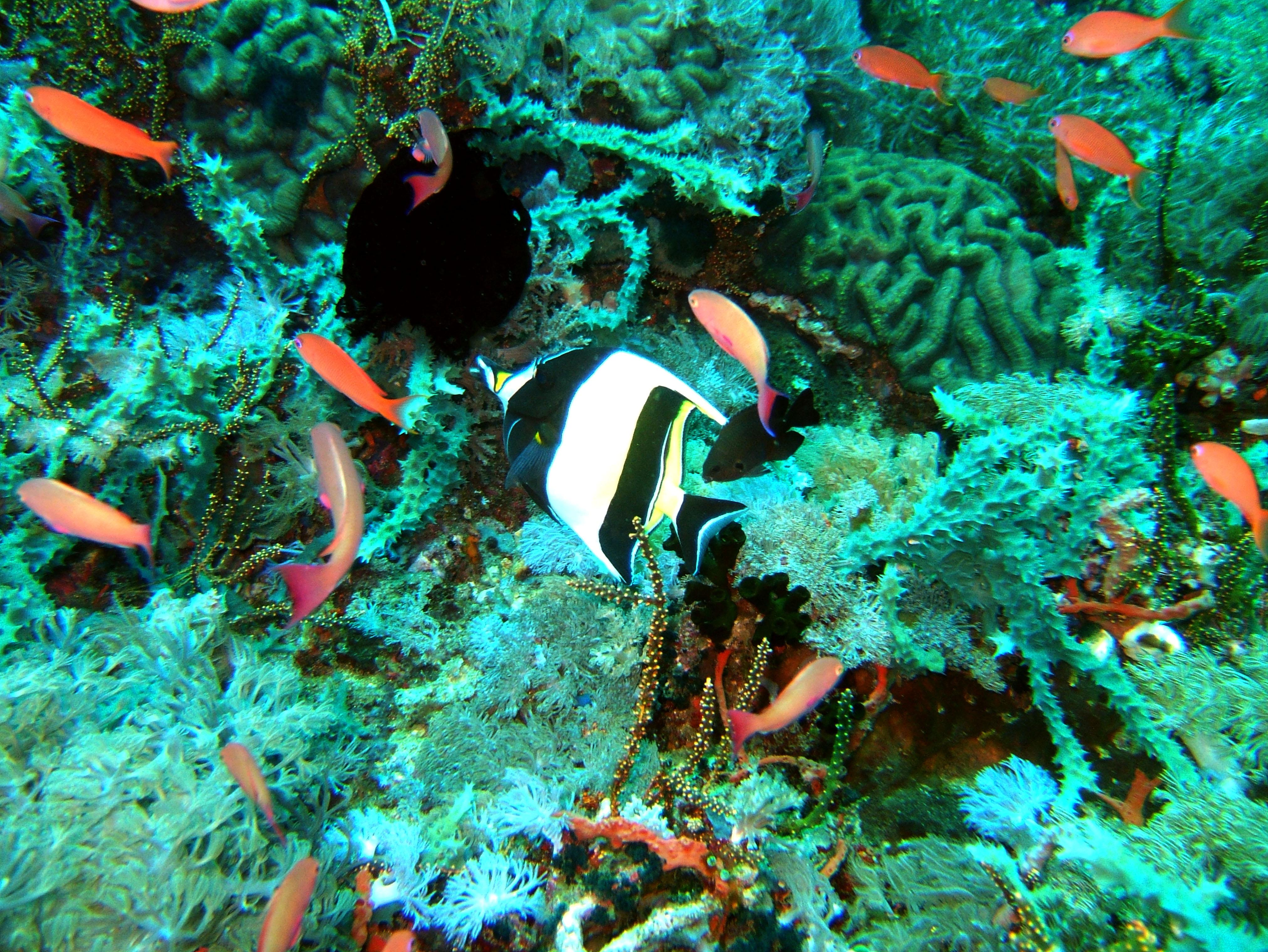 Dive 27 Philippines Mindoro Verdi Island Nov 2005 81