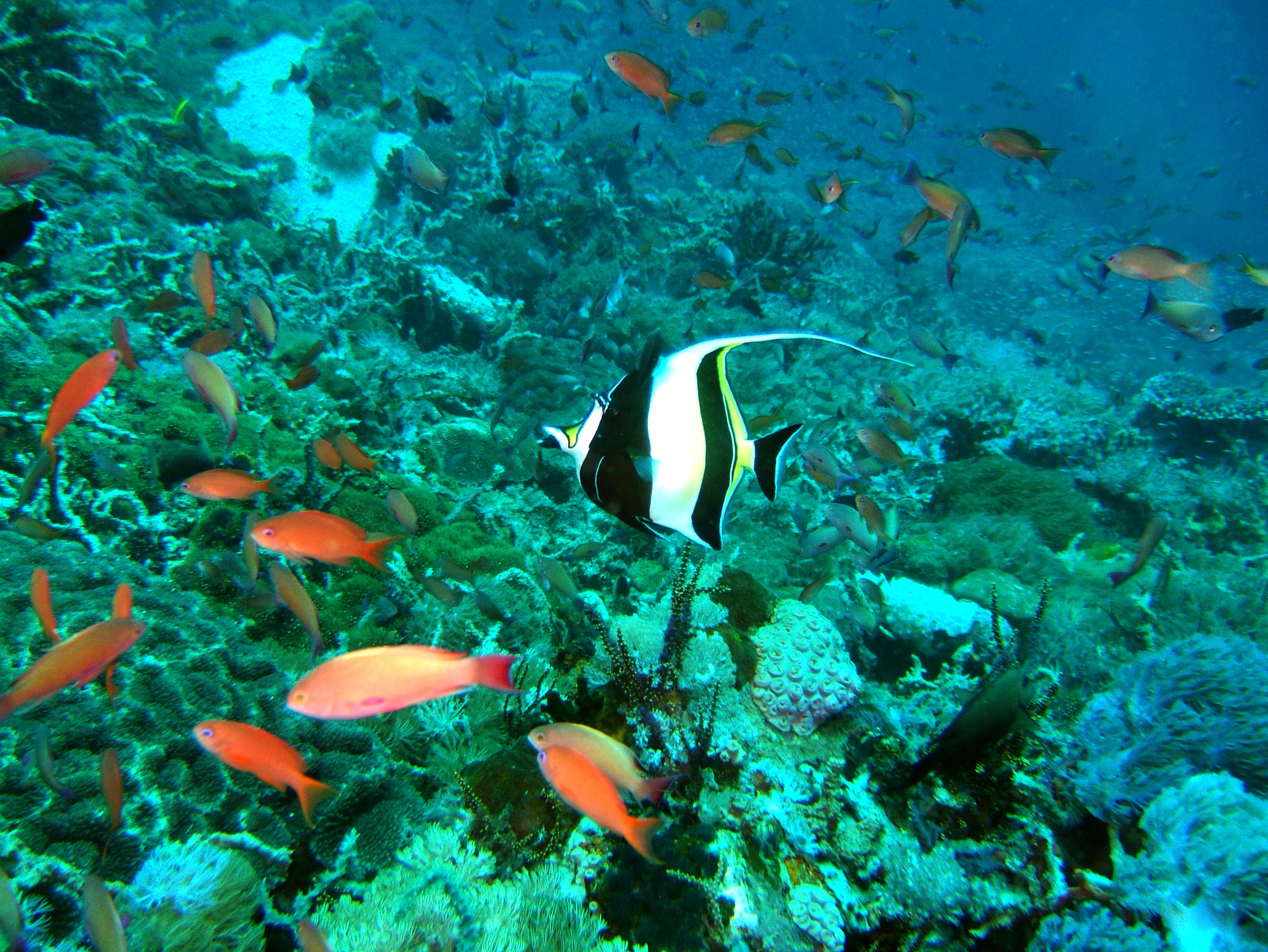 Dive 27 Philippines Mindoro Verdi Island Nov 2005 82
