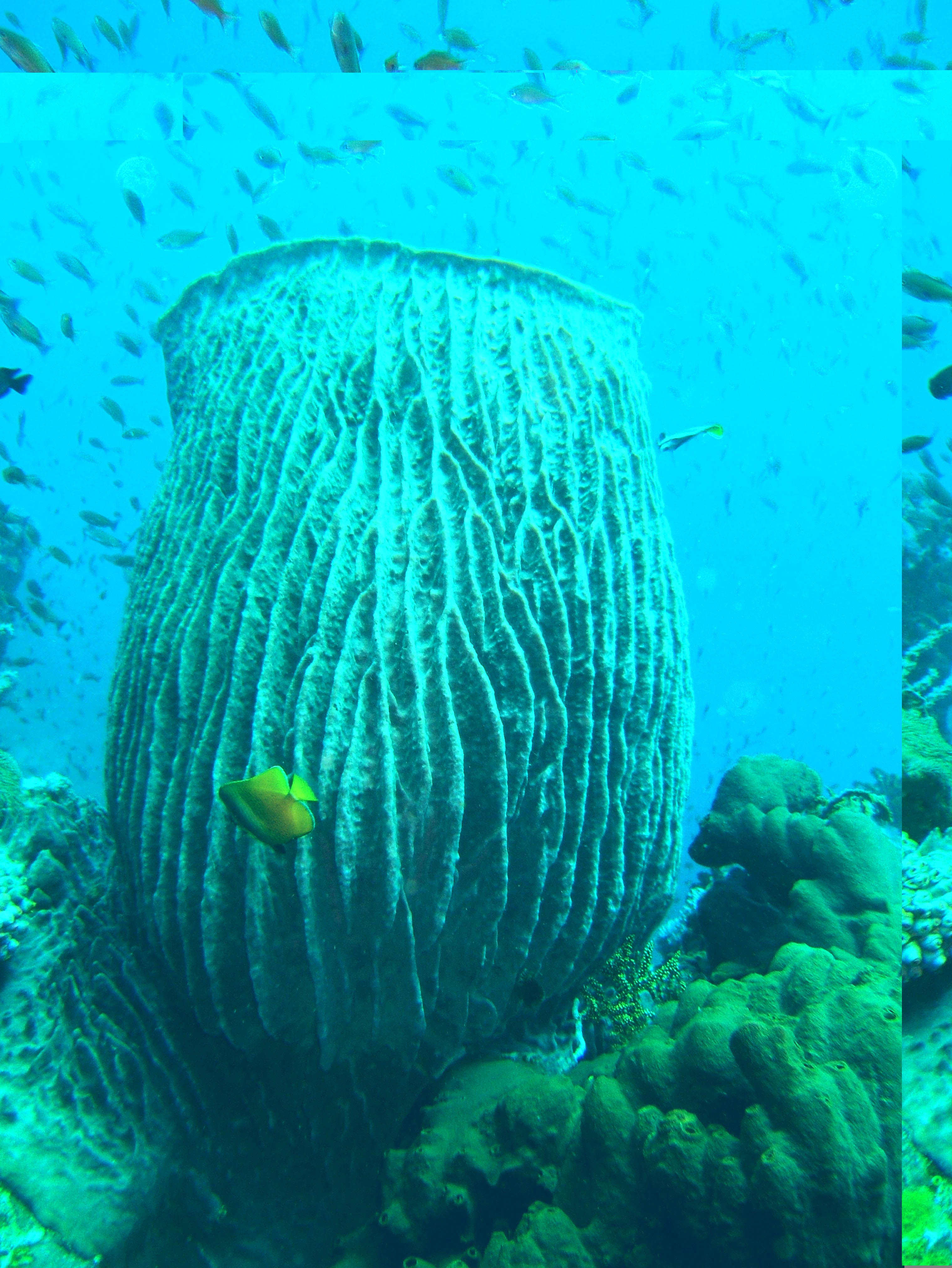 Dive 27 Philippines Mindoro Verdi Island Nov 2005 85