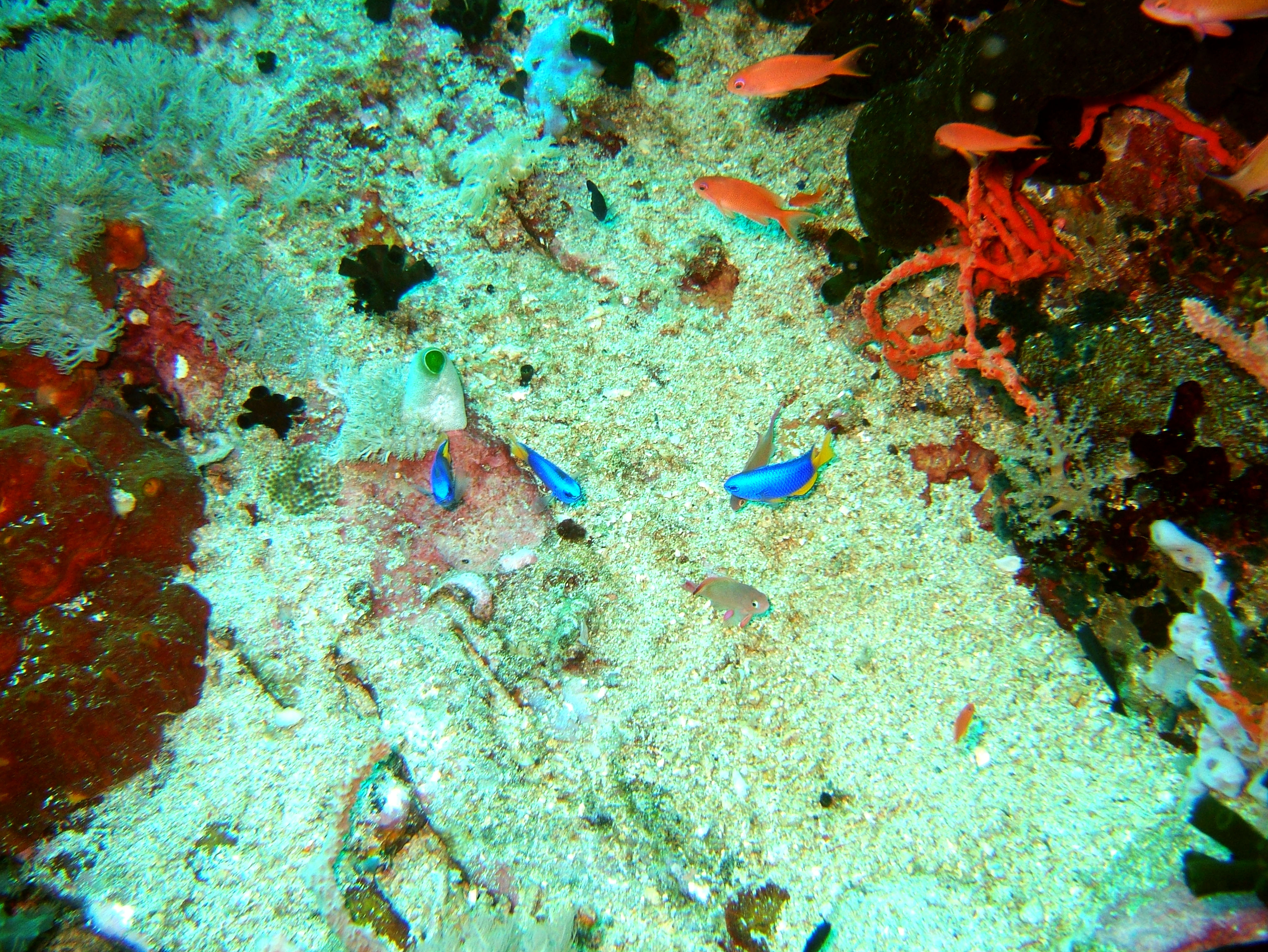 Dive 27 Philippines Mindoro Verdi Island Nov 2005 89