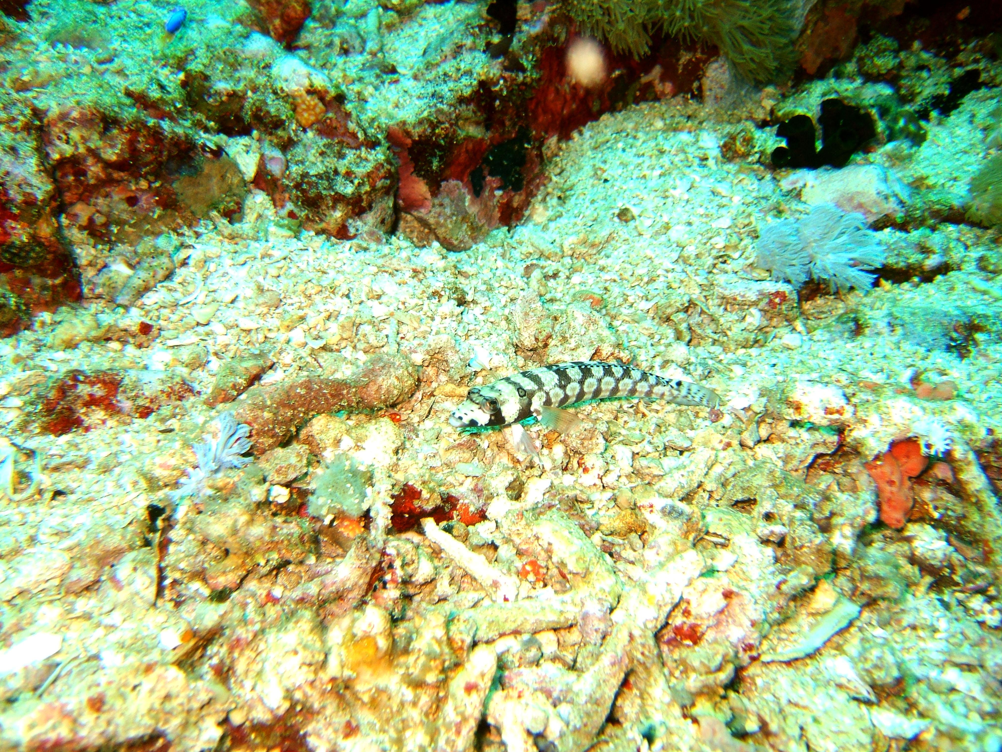 Dive 27 Philippines Mindoro Verdi Island Nov 2005 90