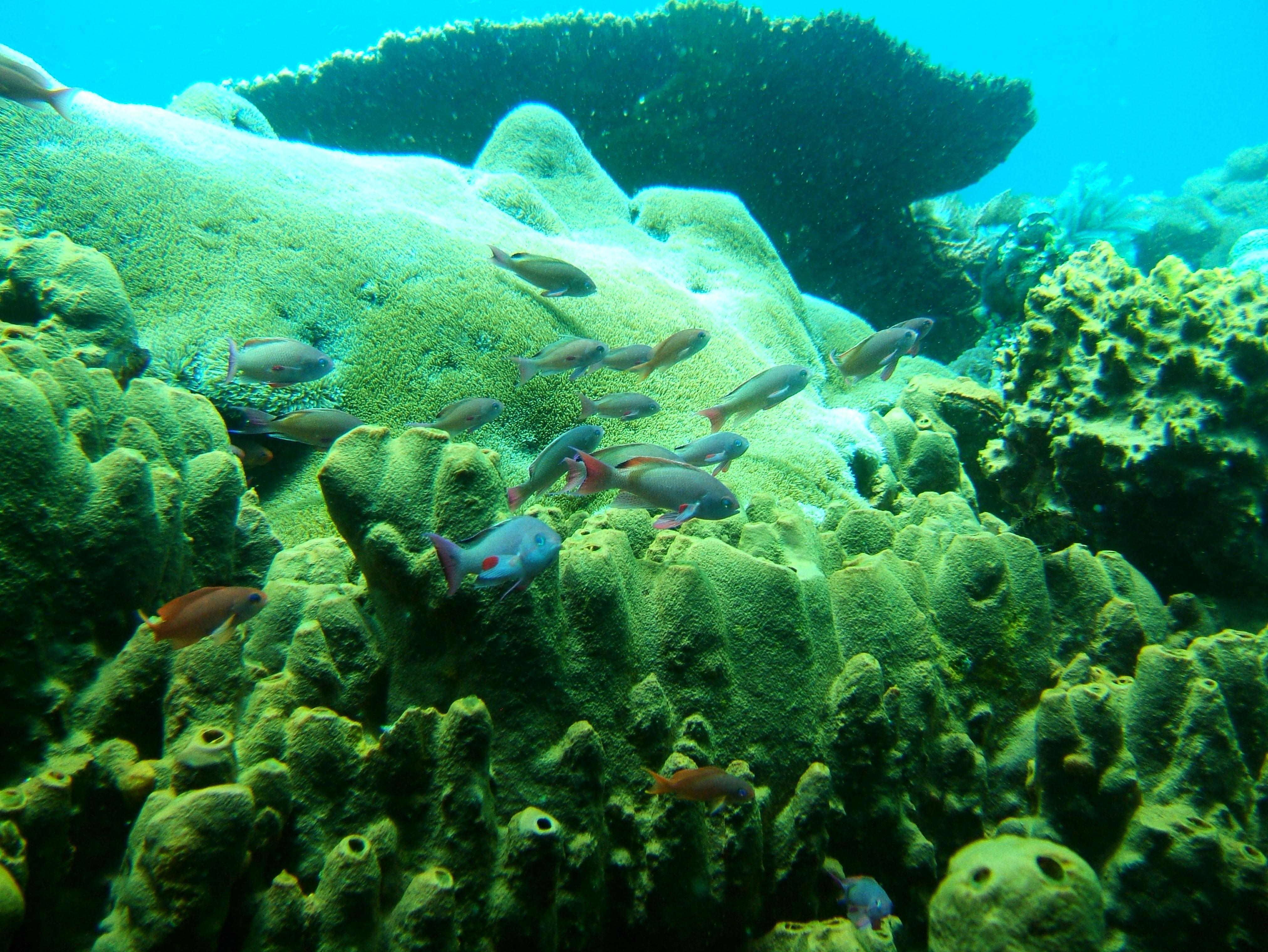 Dive 27 Philippines Mindoro Verdi Island Nov 2005 92