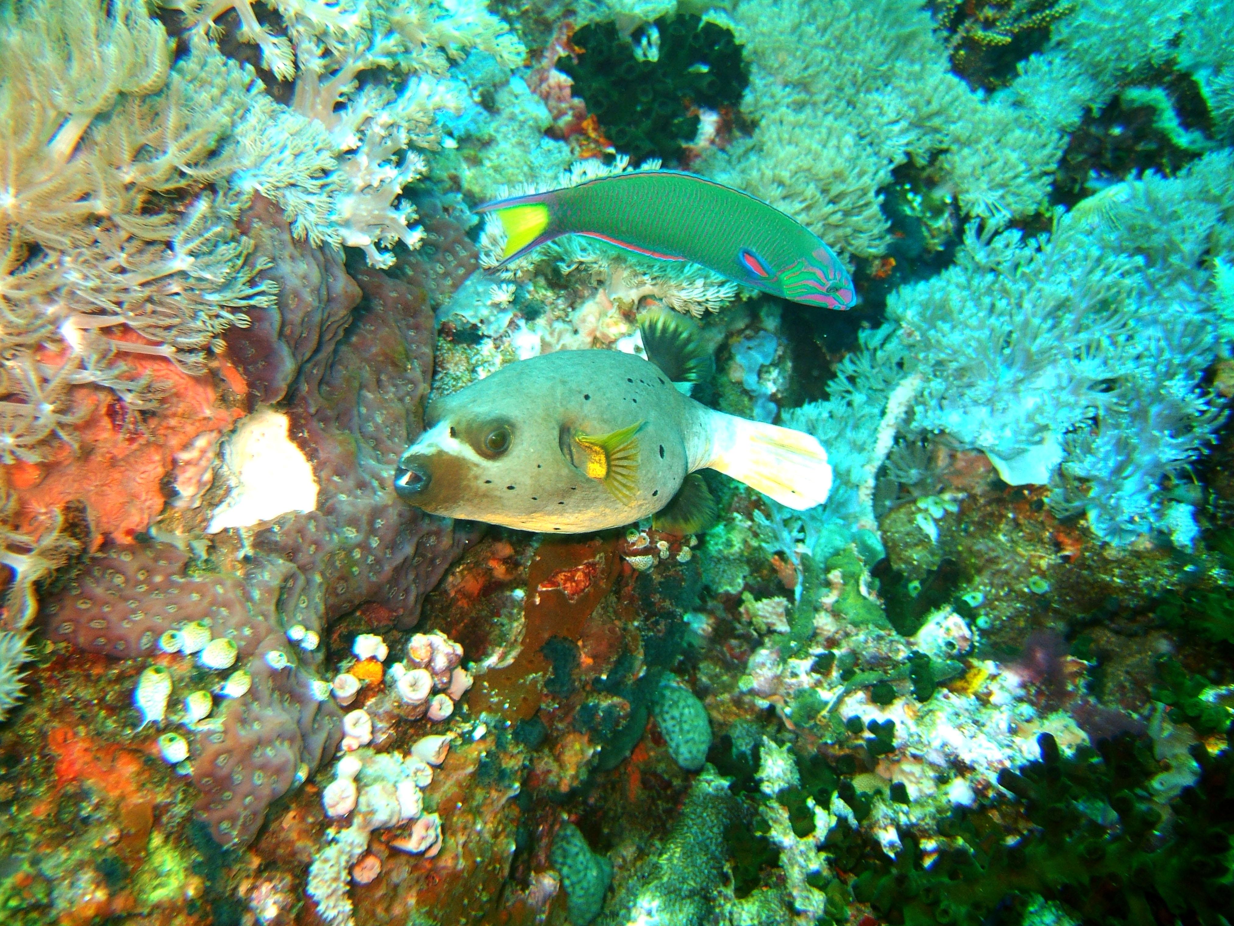 Dive 27 Philippines Mindoro Verdi Island Nov 2005 94