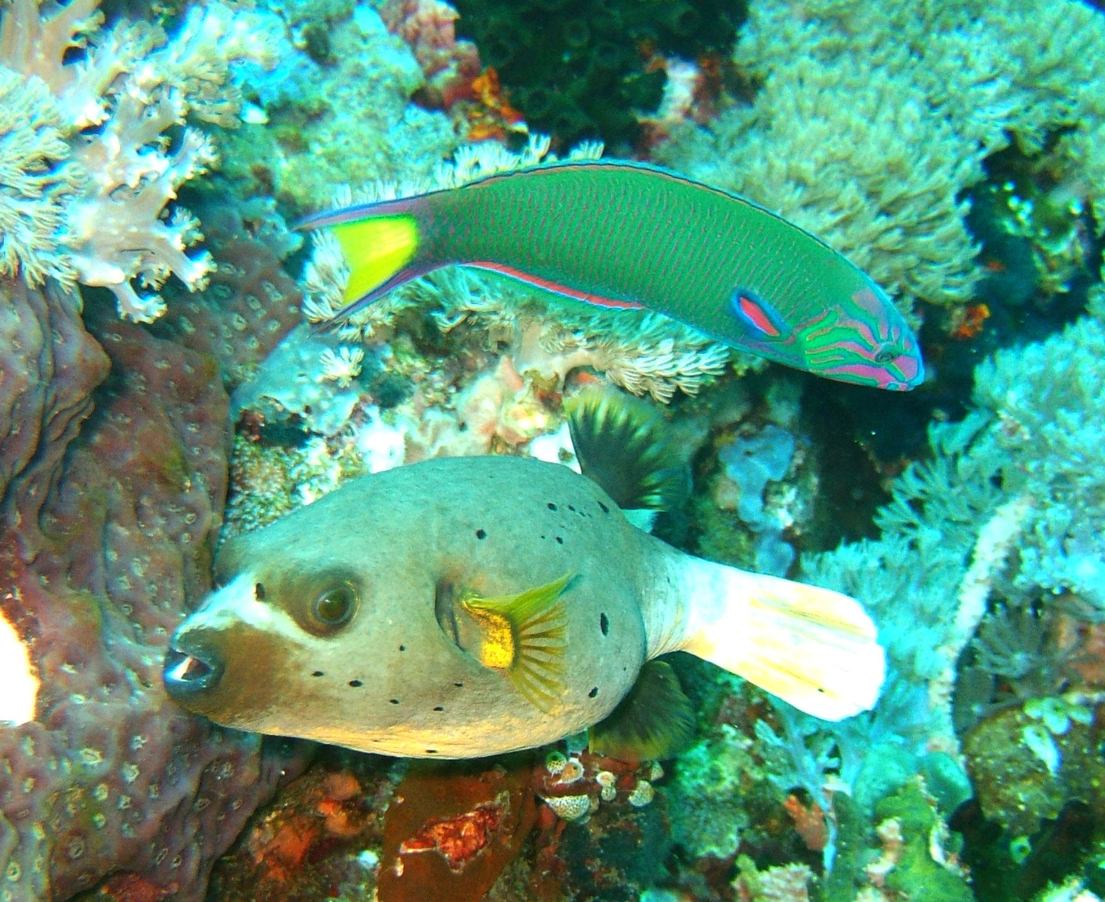 Dive 27 Philippines Mindoro Verdi Island Nov 2005 95