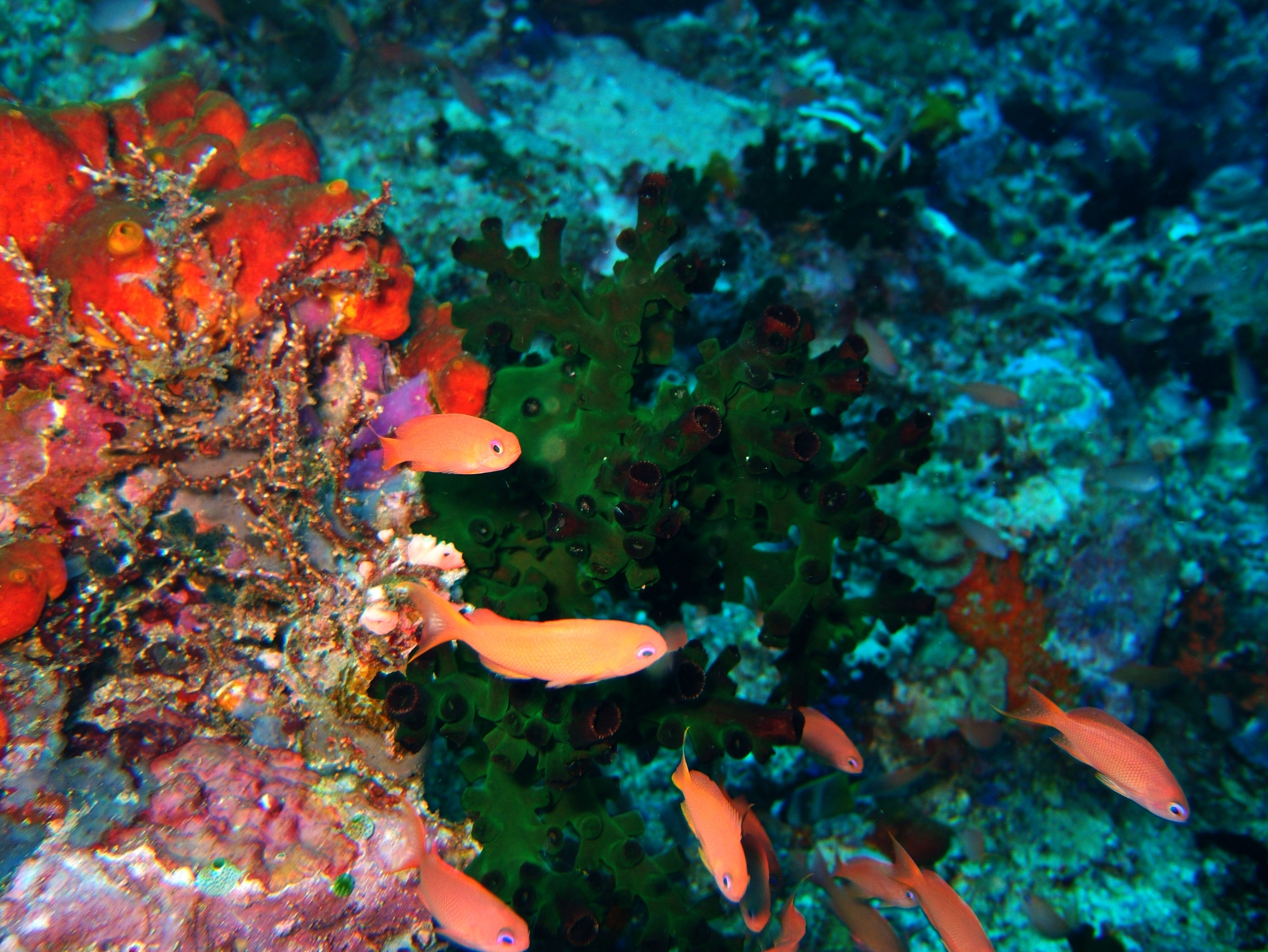 Dive 28 Philippines Mindoro Verdi Island June 2005 04