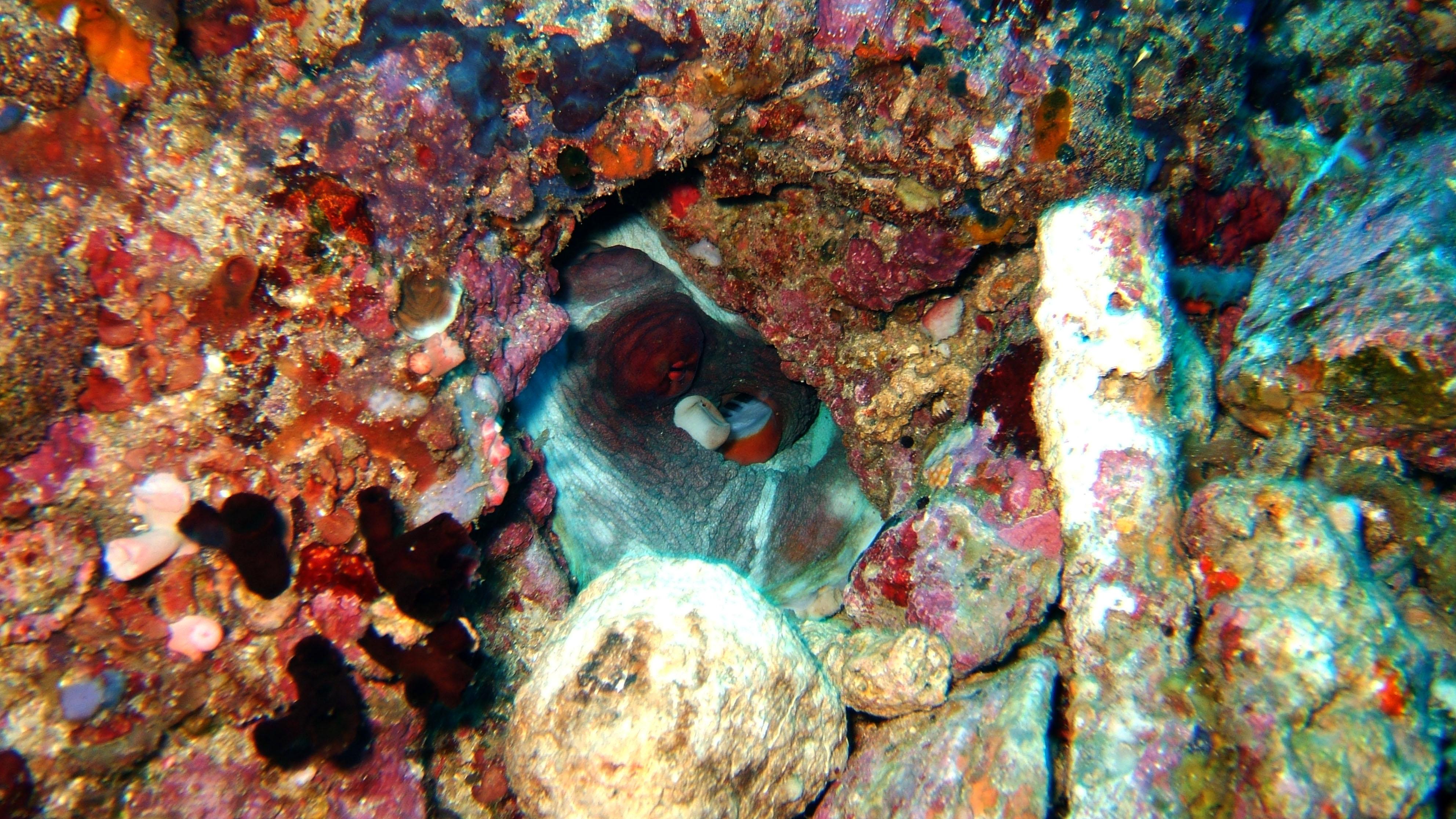 Dive 28 Philippines Mindoro Verdi Island June 2005 07