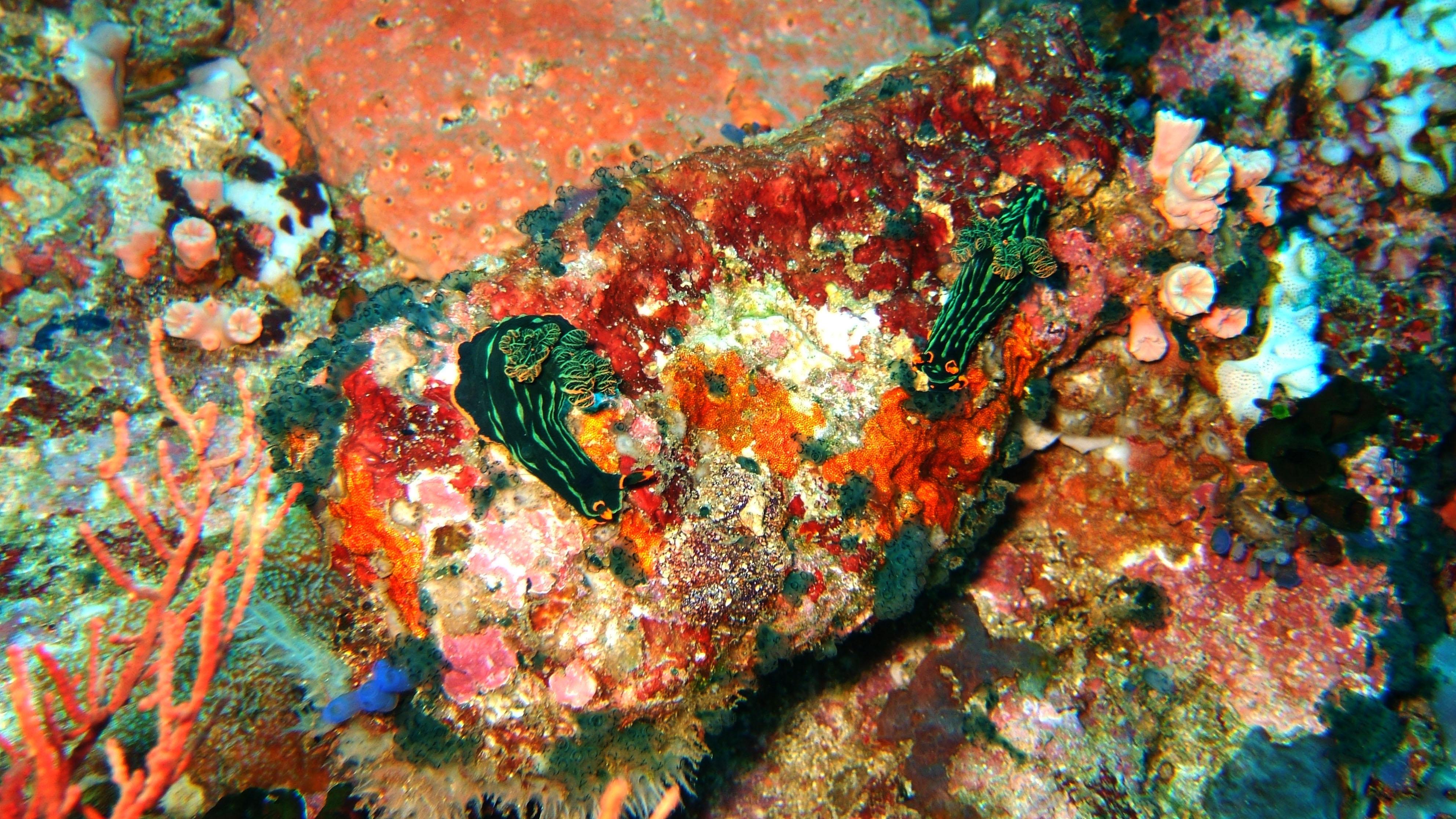 Dive 28 Philippines Mindoro Verdi Island June 2005 08