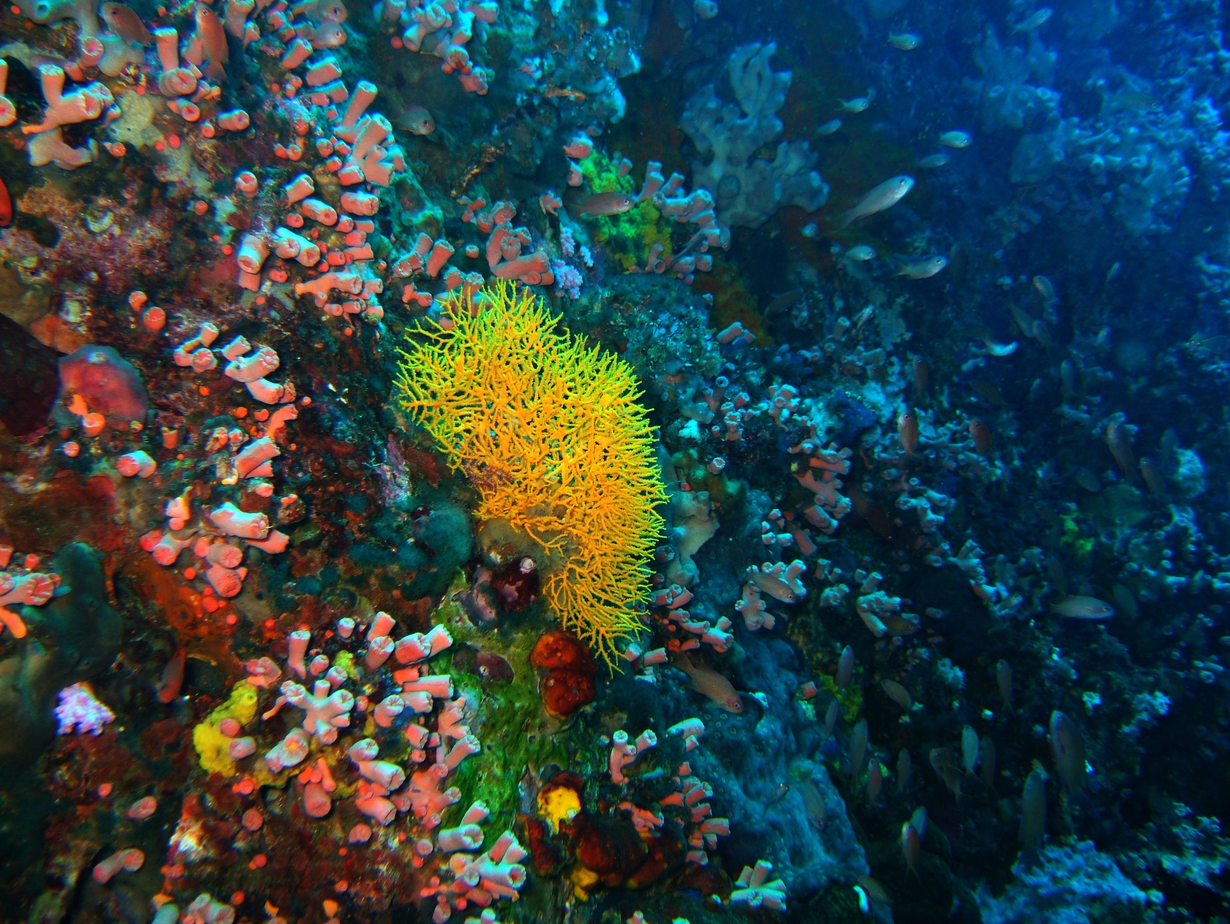Dive 28 Philippines Mindoro Verdi Island June 2005 10