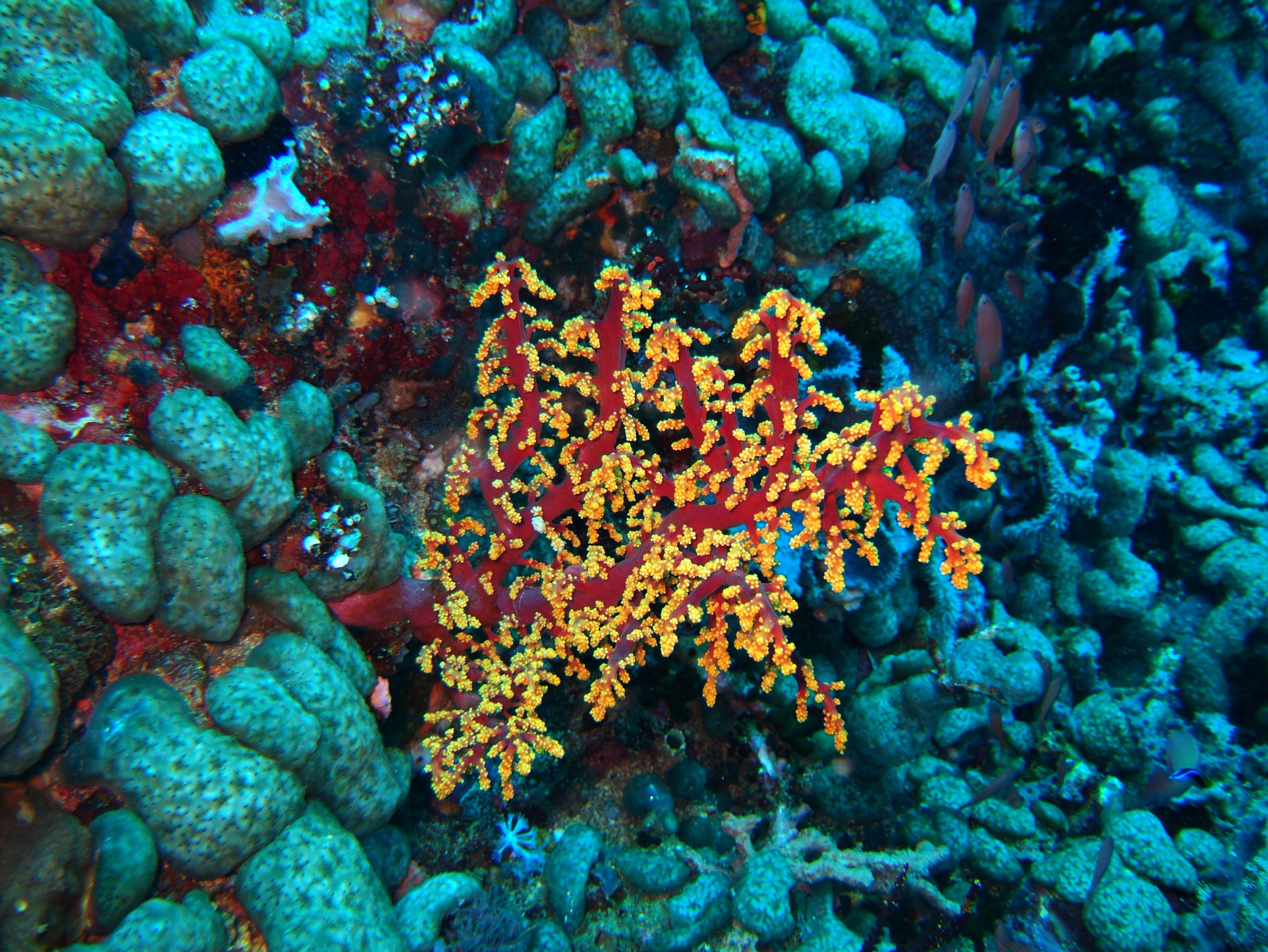 Dive 28 Philippines Mindoro Verdi Island June 2005 12