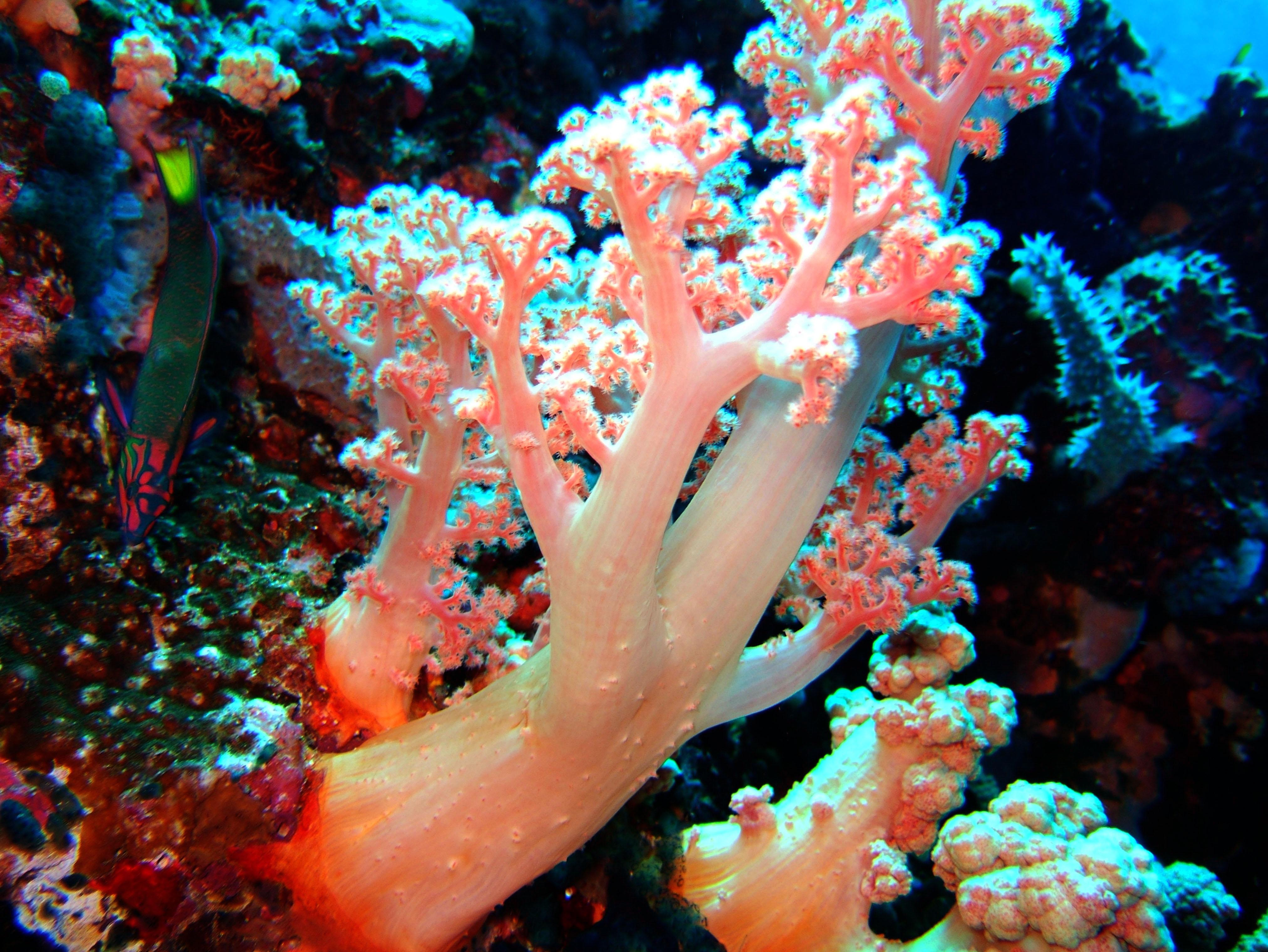 Dive 28 Philippines Mindoro Verdi Island June 2005 15