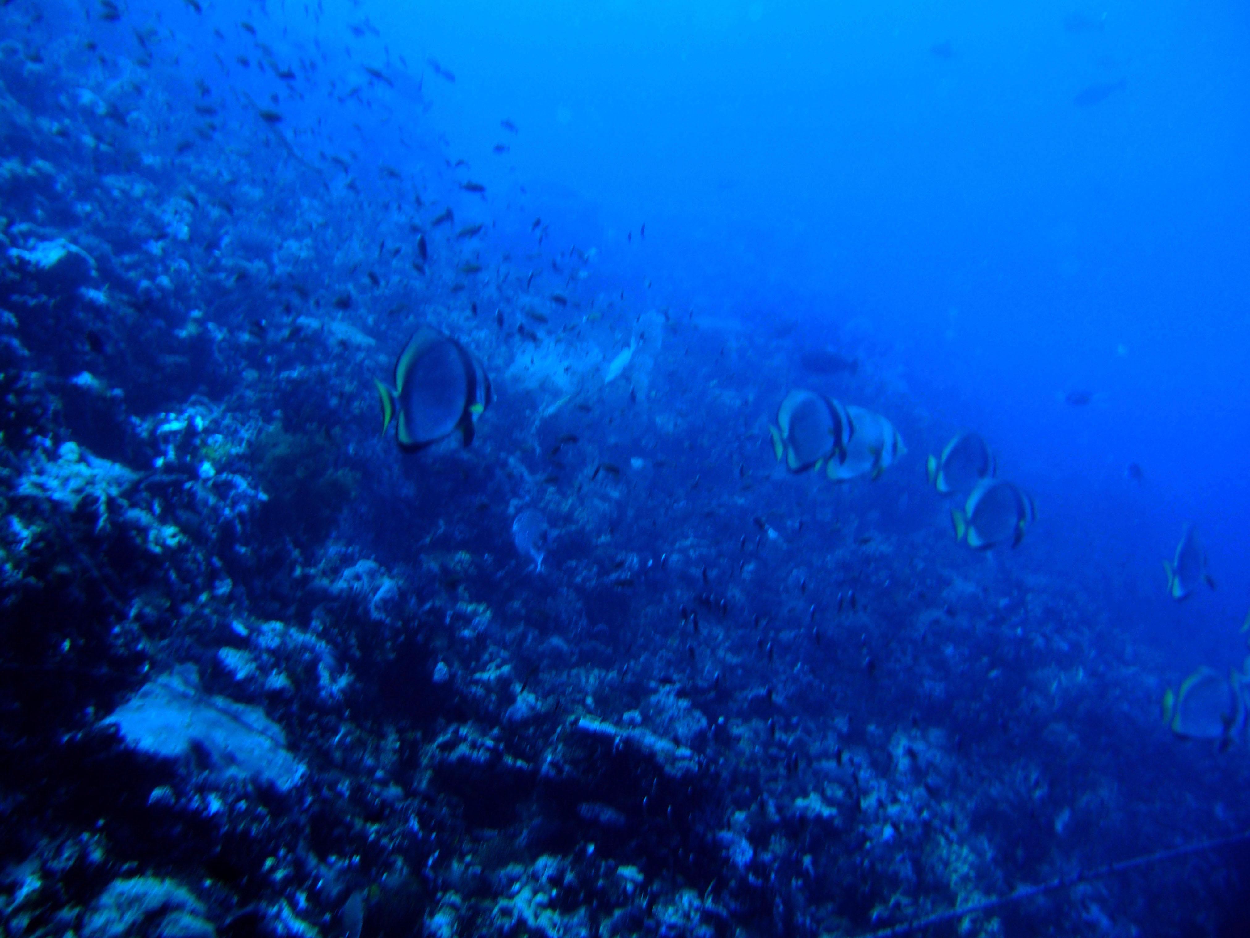 Dive 28 Philippines Mindoro Verdi Island June 2005 18