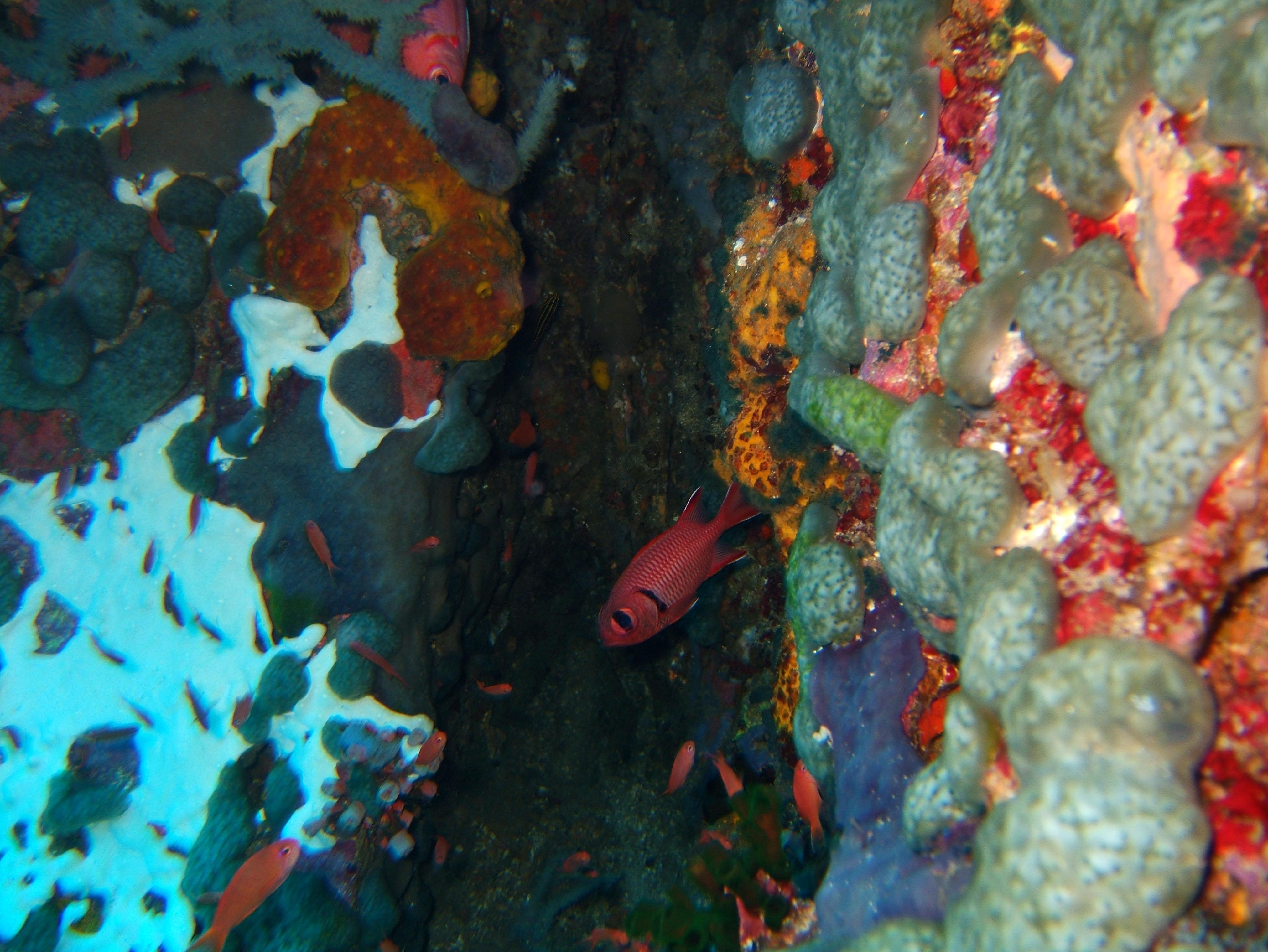 Dive 28 Philippines Mindoro Verdi Island June 2005 19