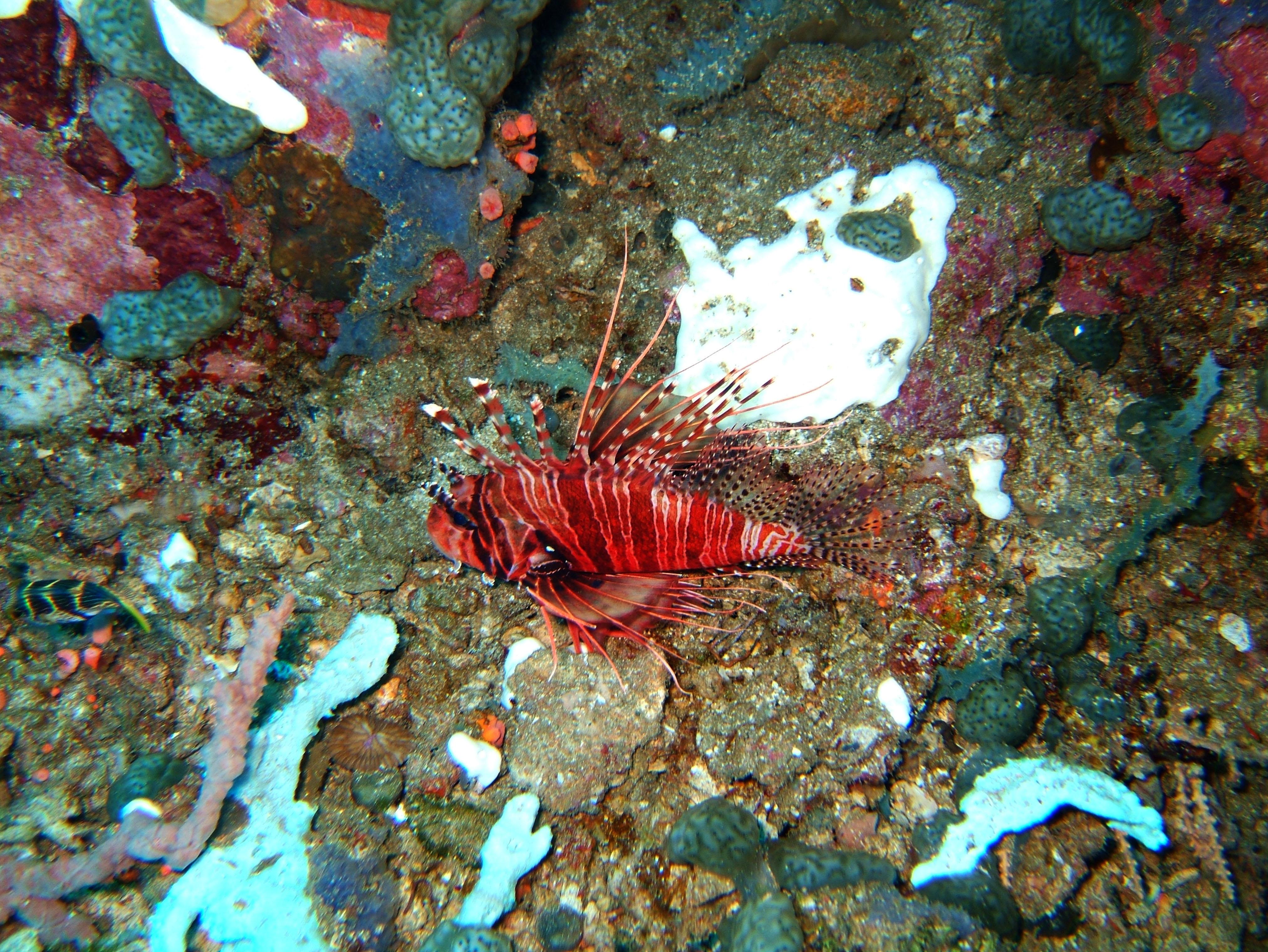Dive 28 Philippines Mindoro Verdi Island June 2005 20