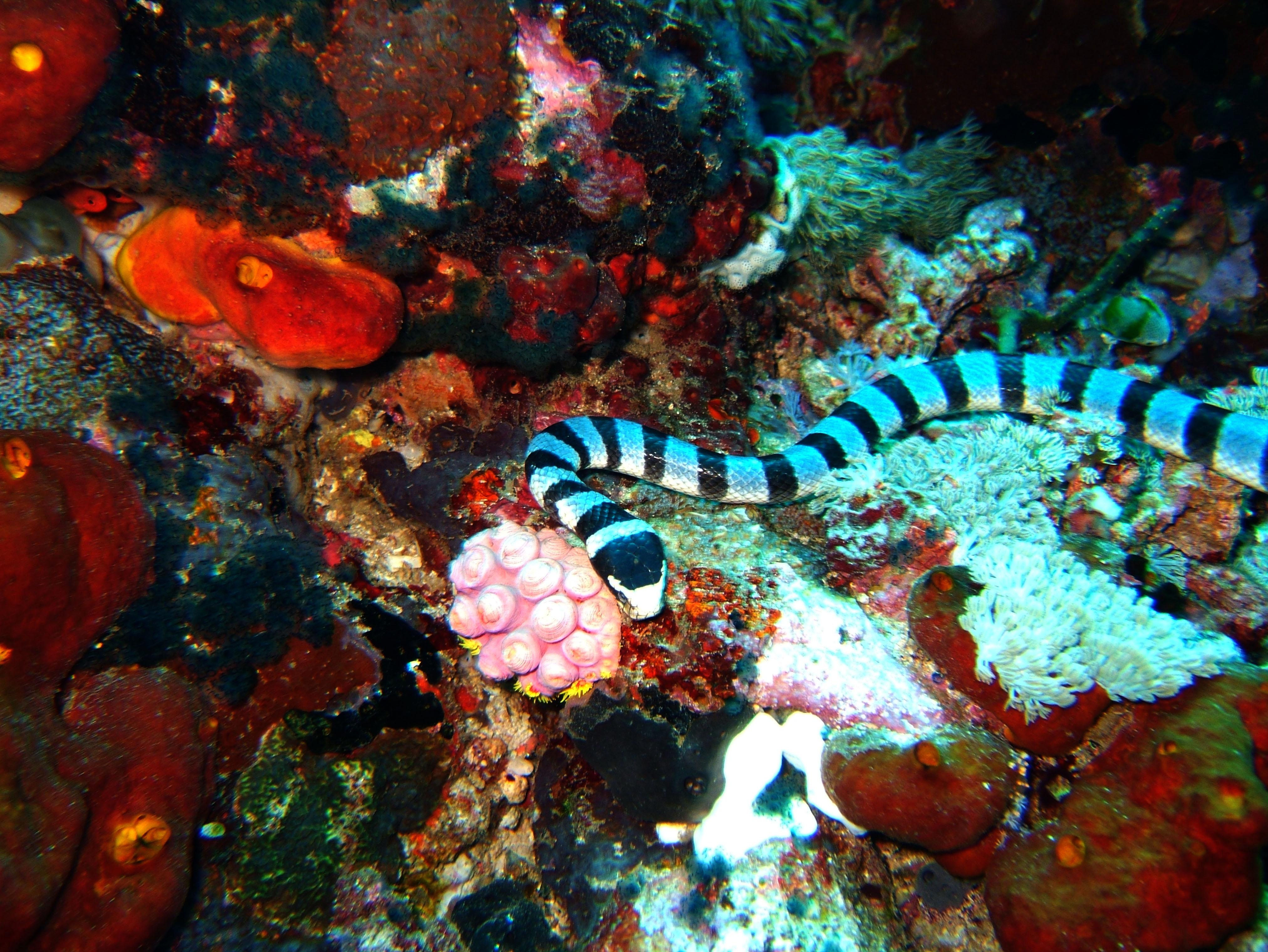 Dive 28 Philippines Mindoro Verdi Island June 2005 23