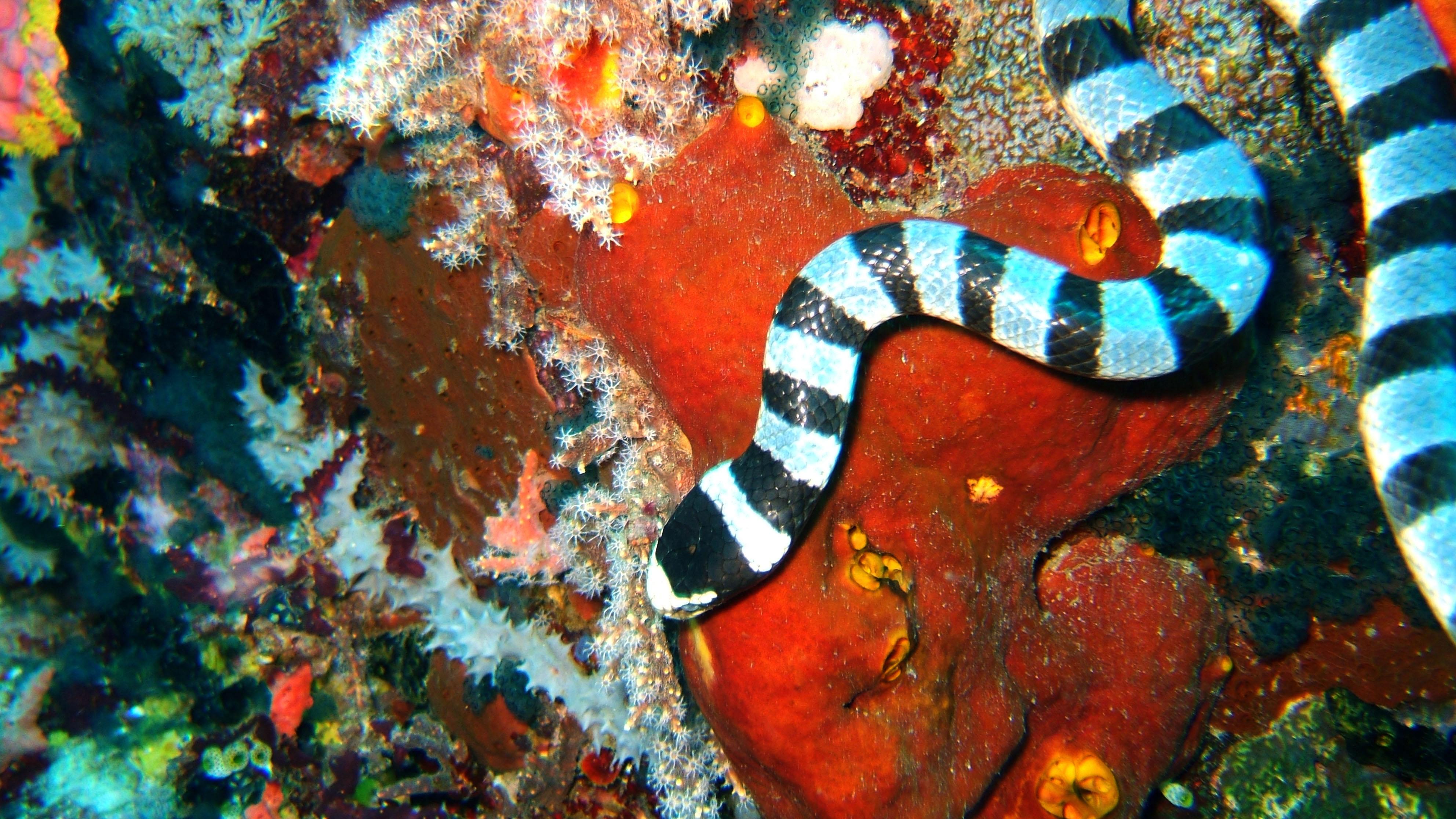 Dive 28 Philippines Mindoro Verdi Island June 2005 25