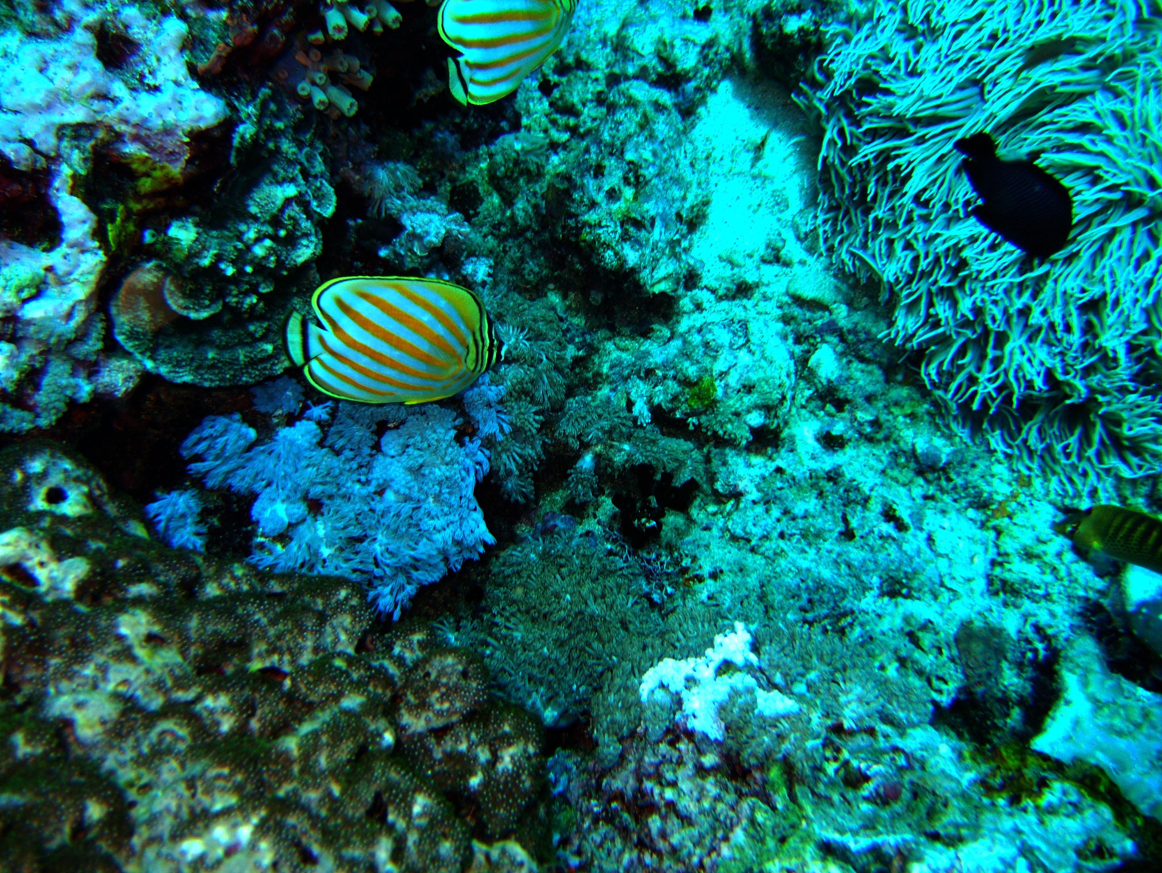 Dive 28 Philippines Mindoro Verdi Island June 2005 29