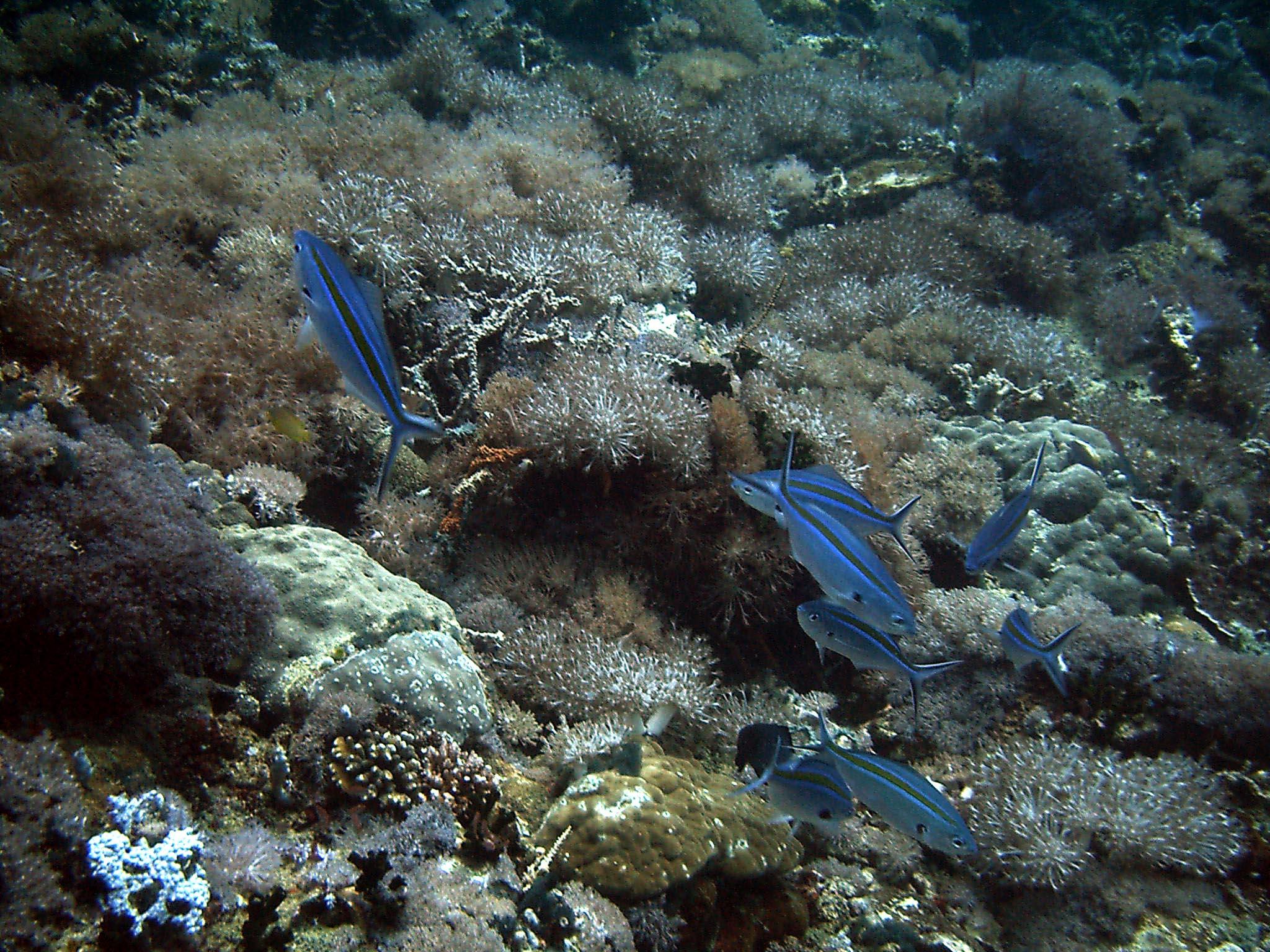 Dive 28 Philippines Mindoro Verdi Island June 2005 33