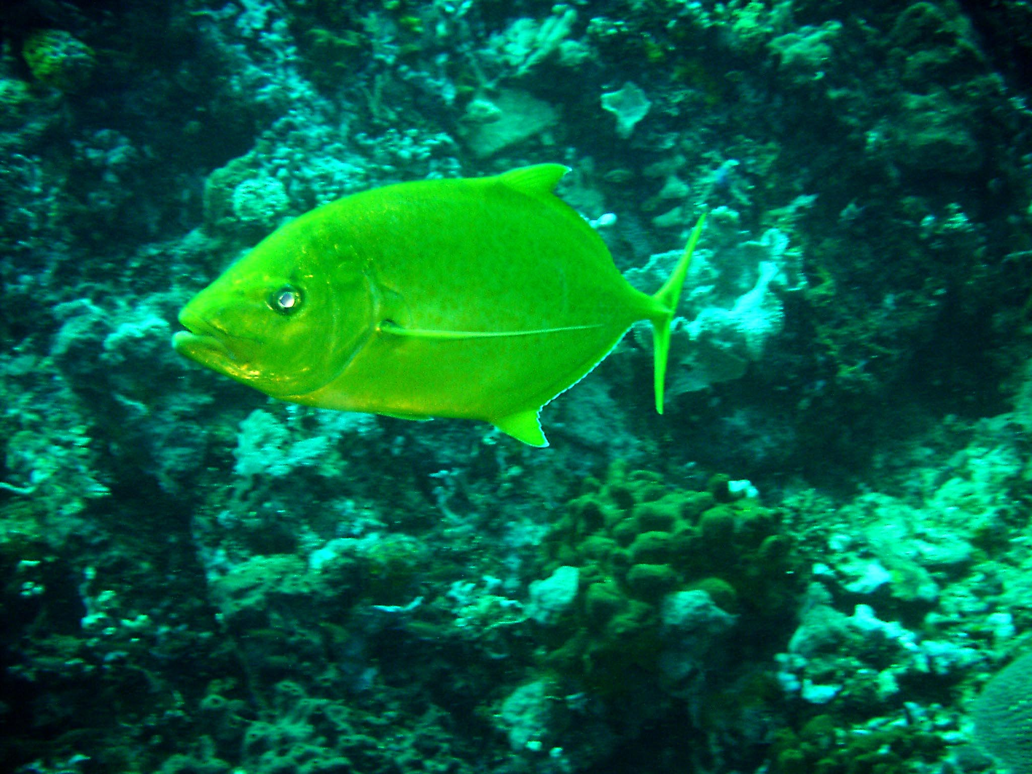 Dive 28 Philippines Mindoro Verdi Island June 2005 34