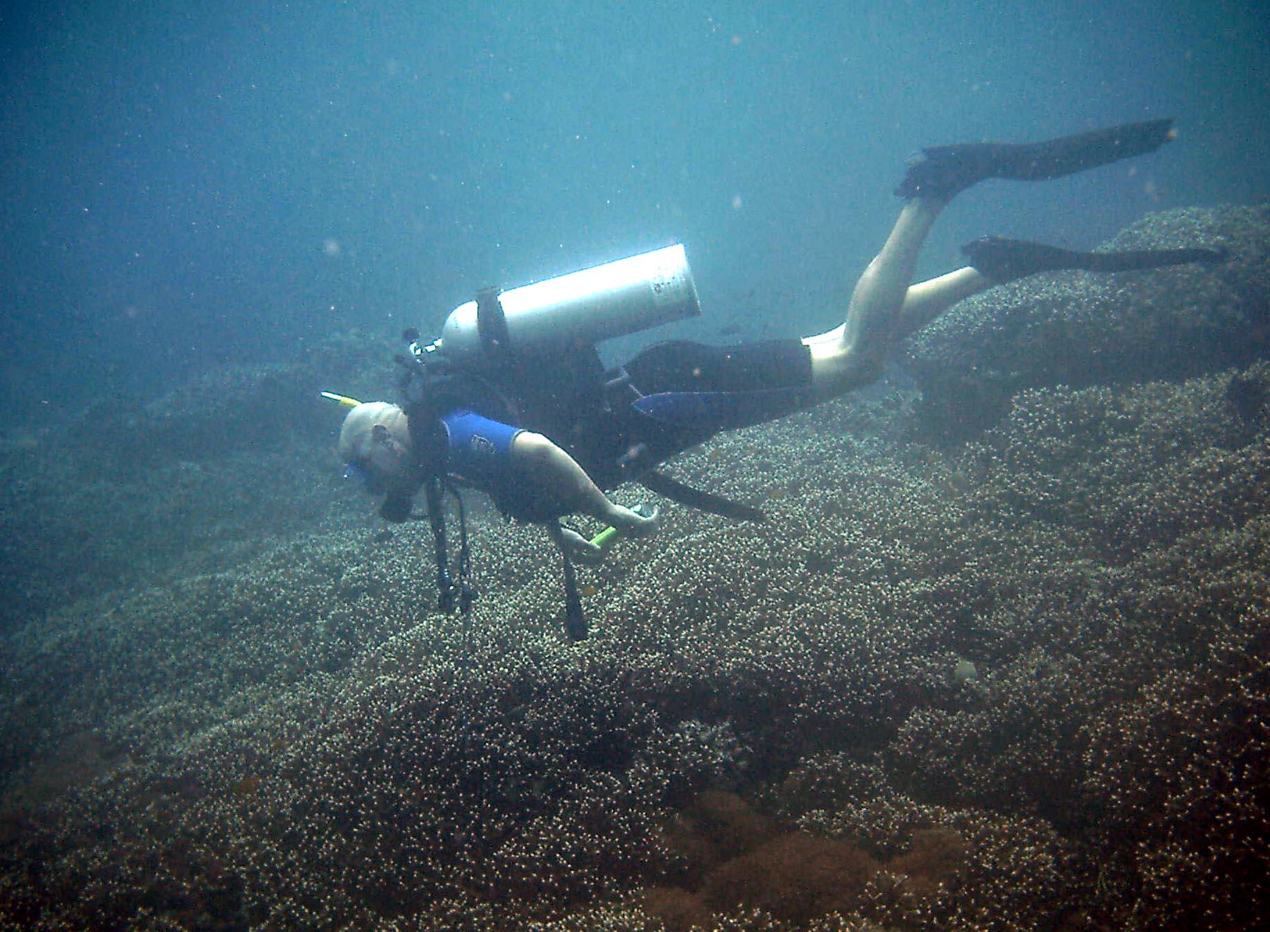 Dive 28 Philippines Mindoro Verdi Island June 2005 40