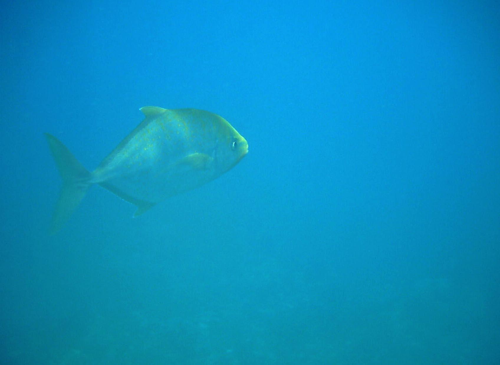 Dive 28 Philippines Mindoro Verdi Island June 2005 41