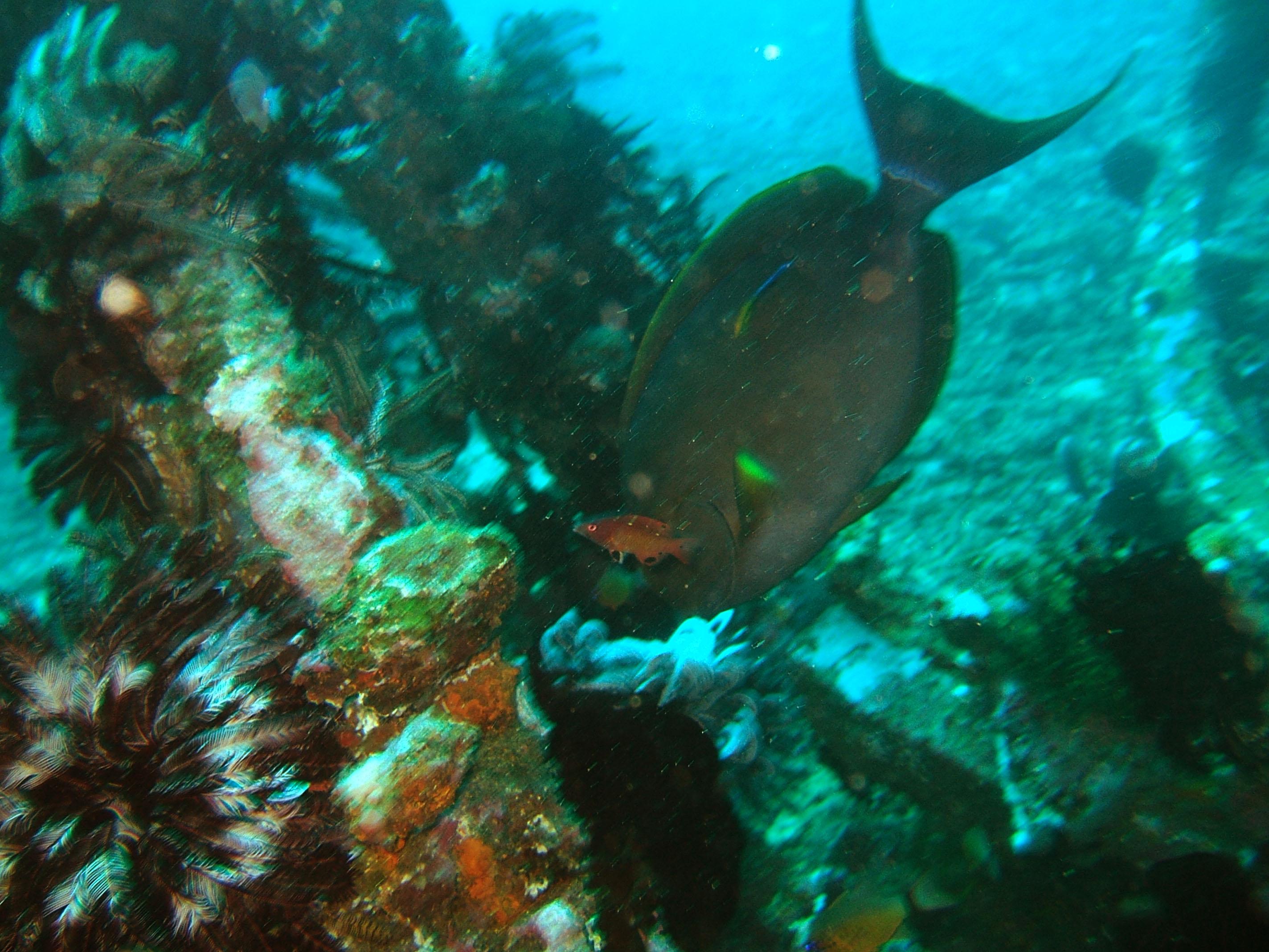 Dive 8 Philippines Mindoro Sabang Elma Jane wreck Oct 2005 19