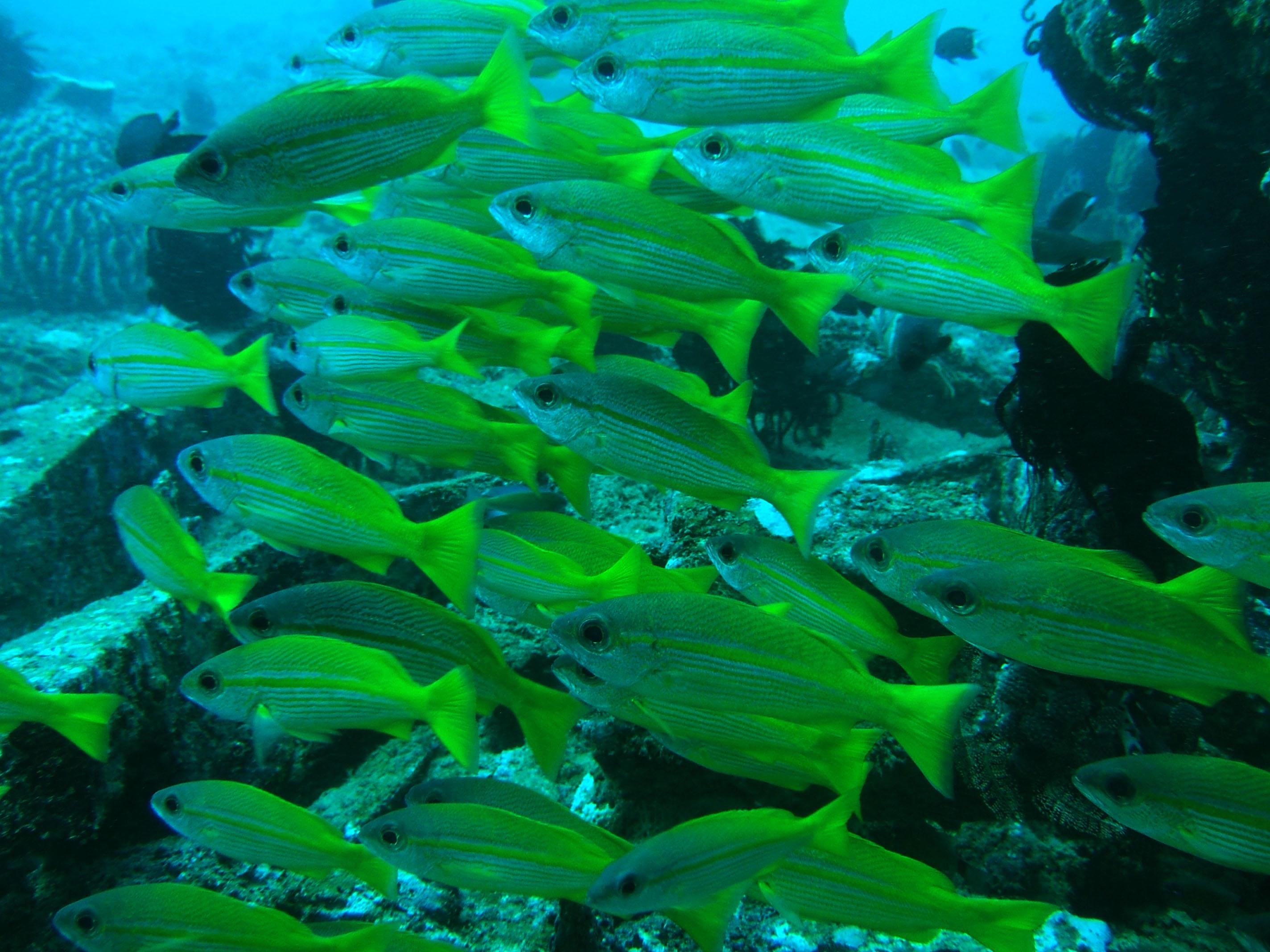 Dive 8 Philippines Mindoro Sabang Elma Jane wreck Oct 2005 25