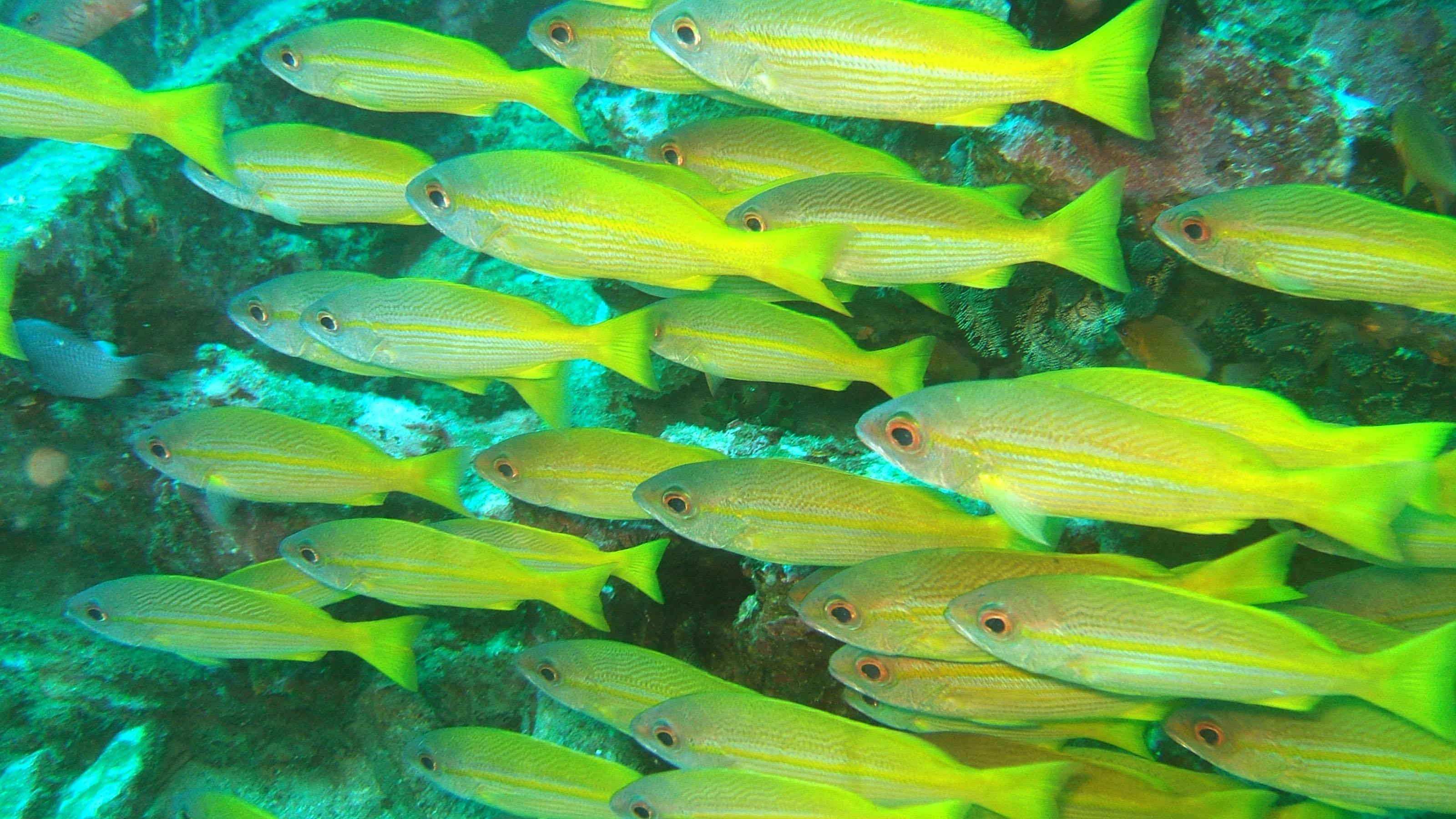 Dive 8 Philippines Mindoro Sabang Elma Jane wreck Oct 2005 30