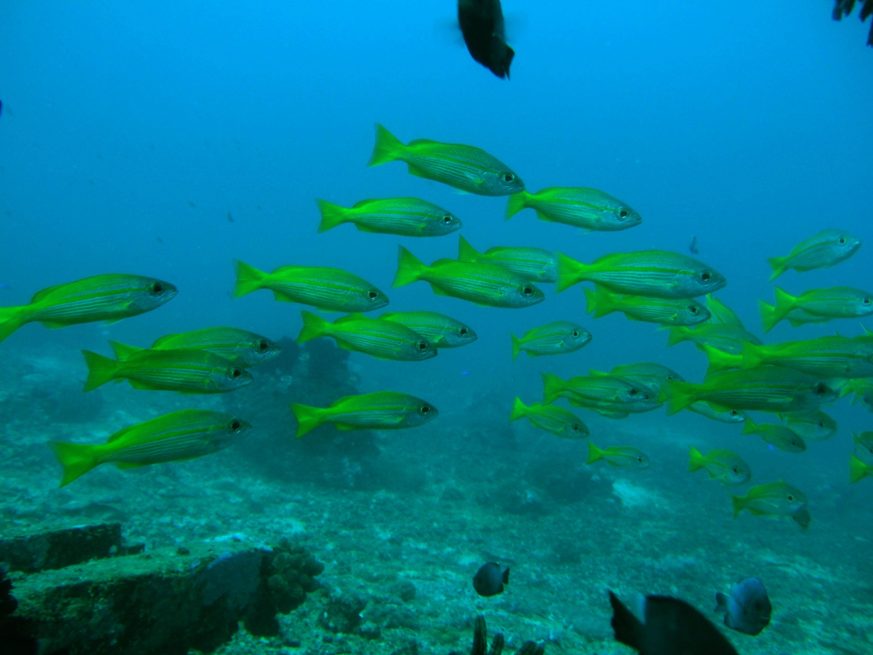 Dive 8 Philippines Mindoro Sabang Elma Jane wreck Oct 2005 32