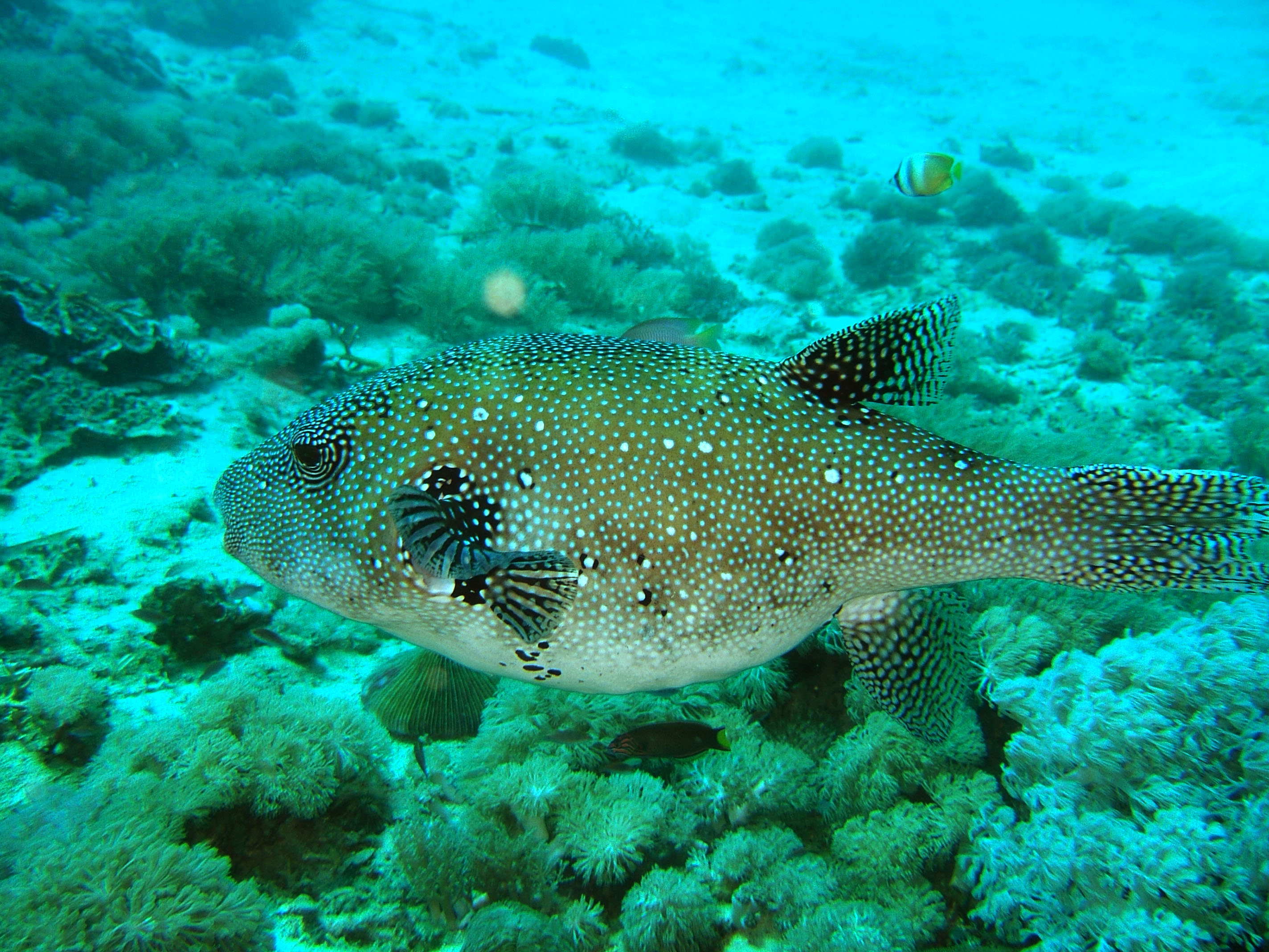 Dive 8 Philippines Mindoro Sabang Elma Jane wreck Oct 2005 35