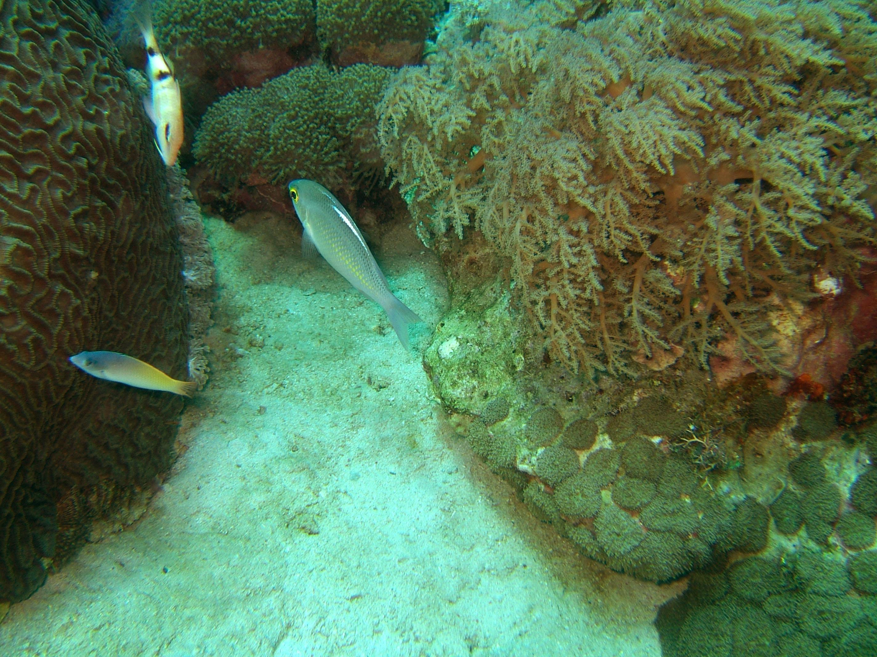 Dive 8 Philippines Mindoro Sabang Elma Jane wreck Oct 2005 38