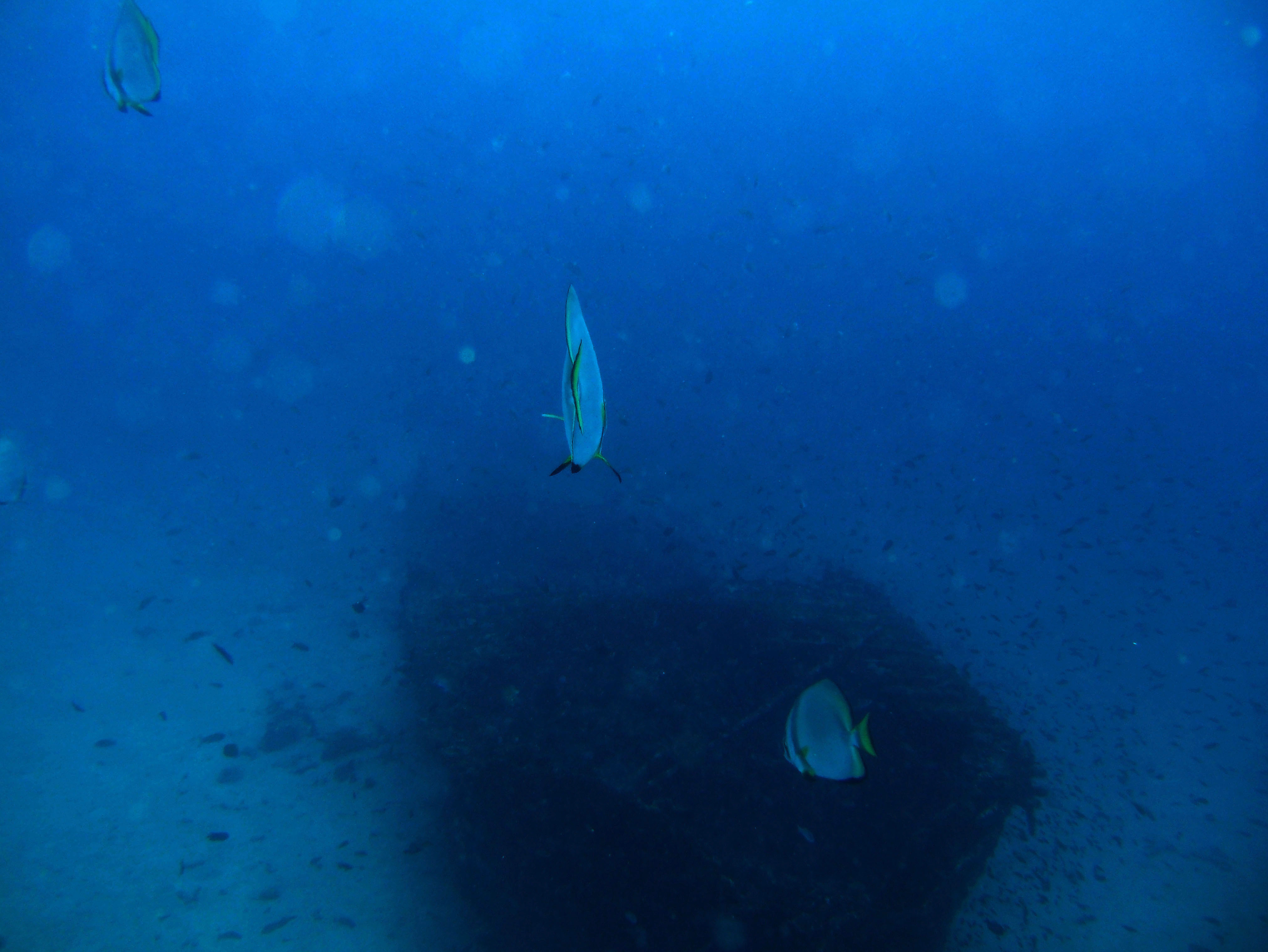 Dive 8 Philippines Mindoro Sabang Junk July 2005 02
