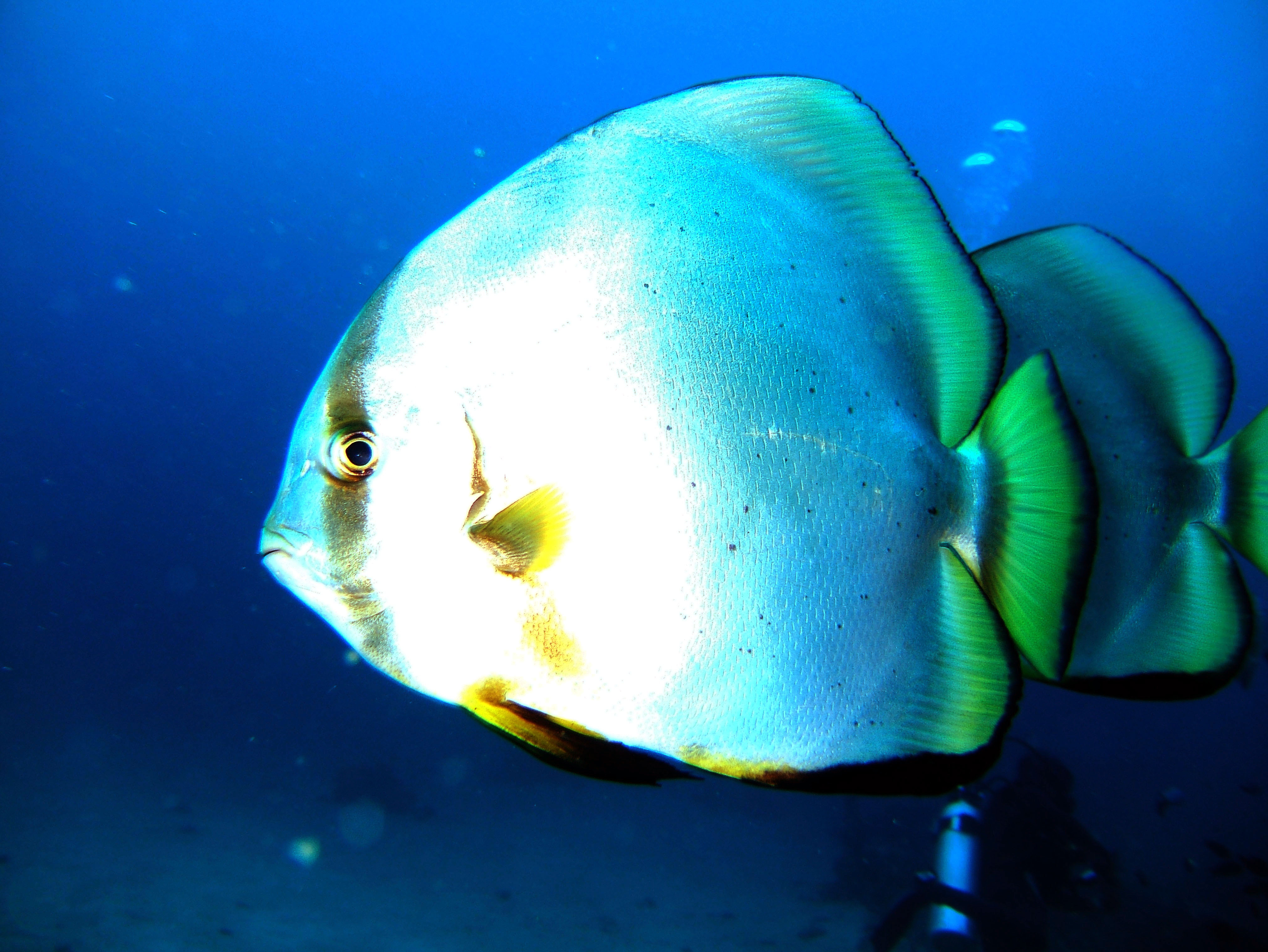 Dive 8 Philippines Mindoro Sabang Junk July 2005 05