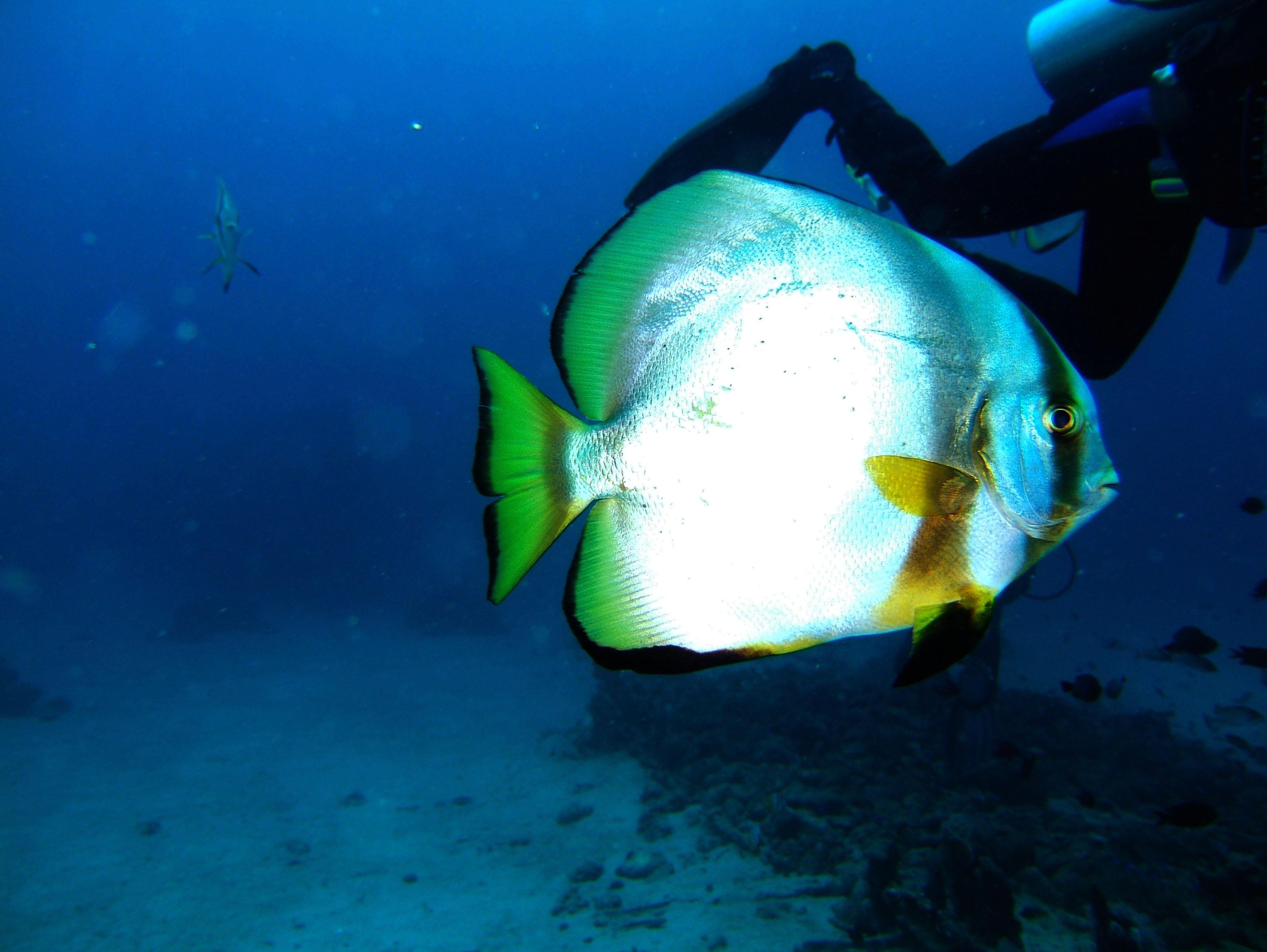 Dive 8 Philippines Mindoro Sabang Junk July 2005 07