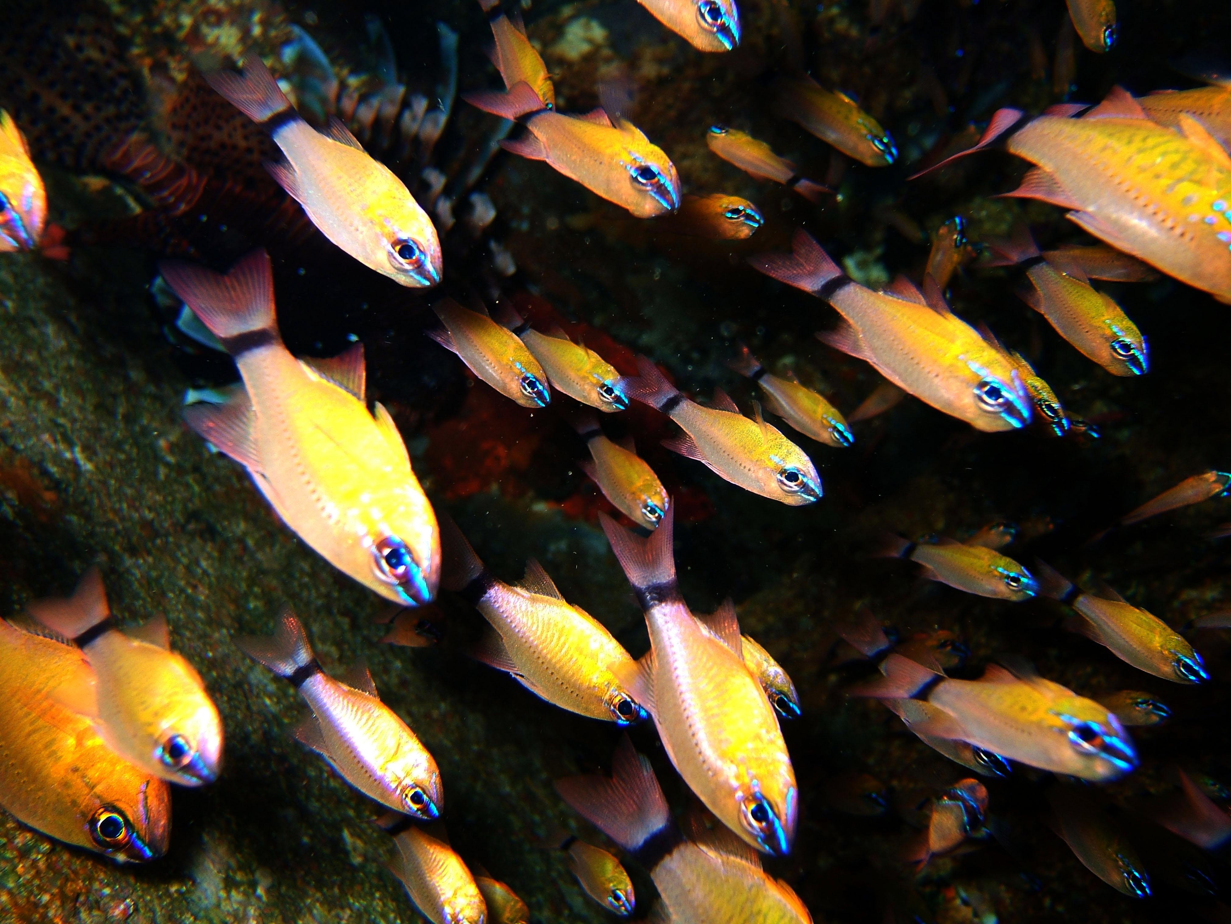 Dive 8 Philippines Mindoro Sabang Junk July 2005 10