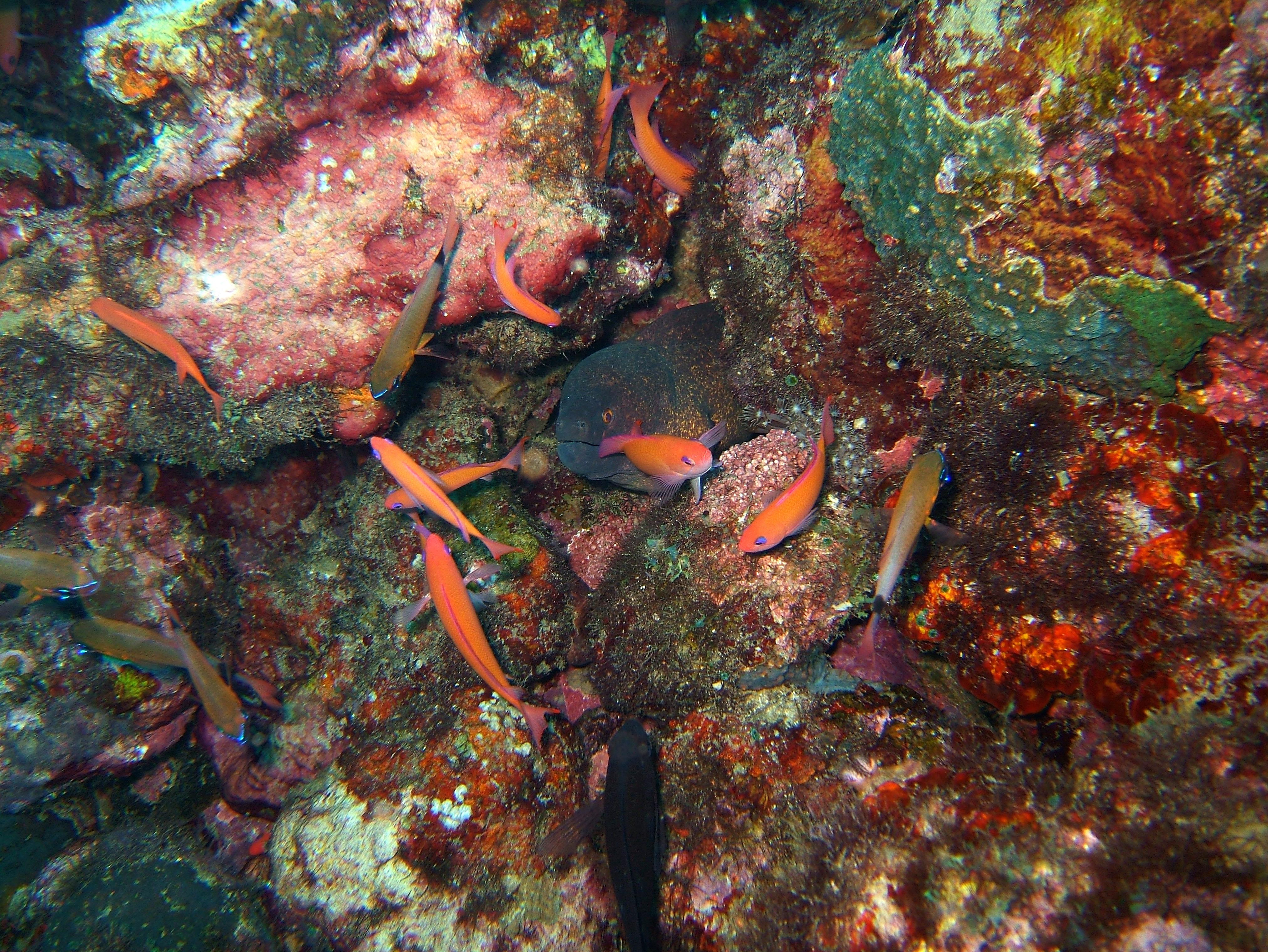 Dive 8 Philippines Mindoro Sabang Junk July 2005 11