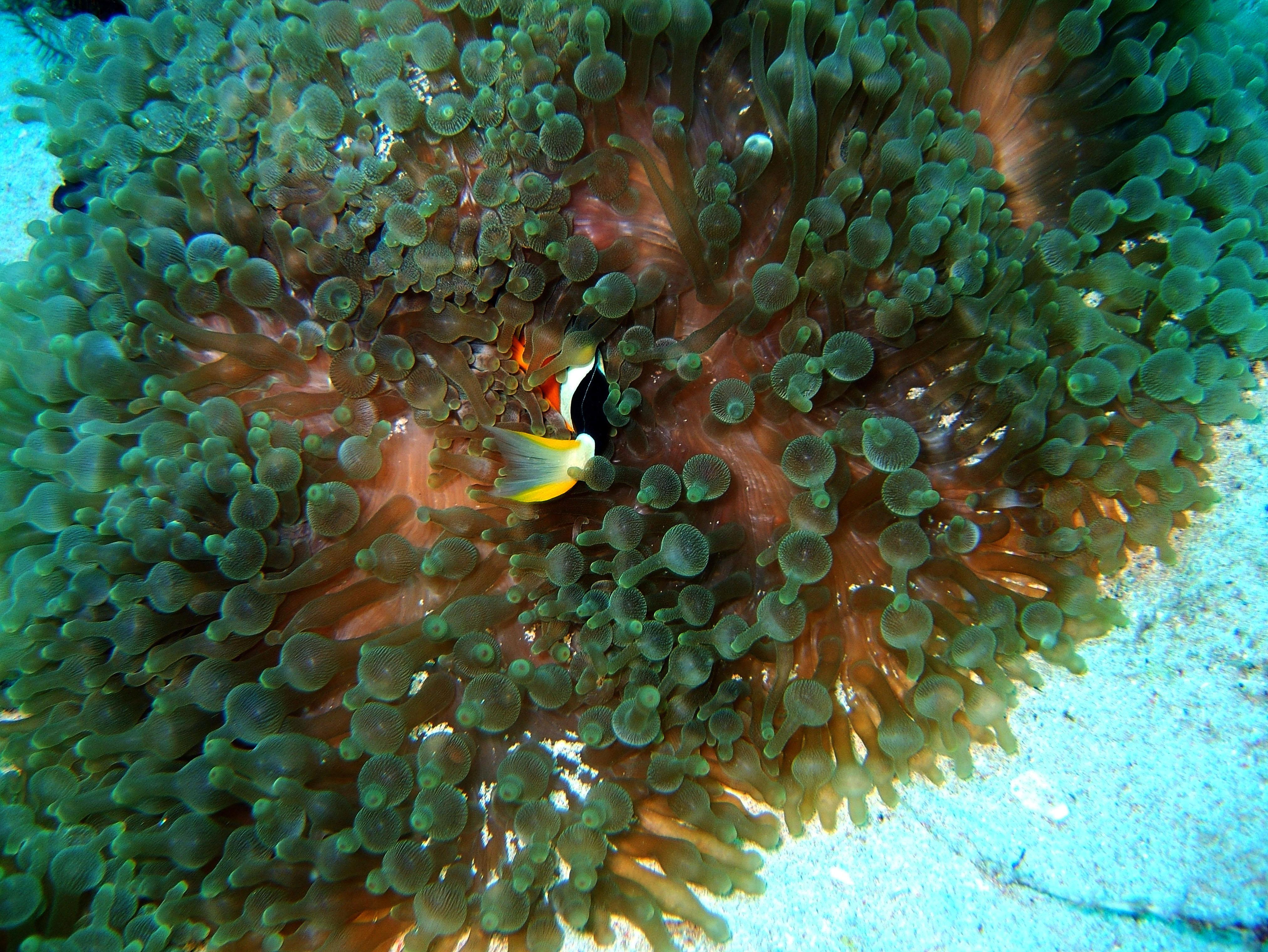 Dive 8 Philippines Mindoro Sabang Junk July 2005 13